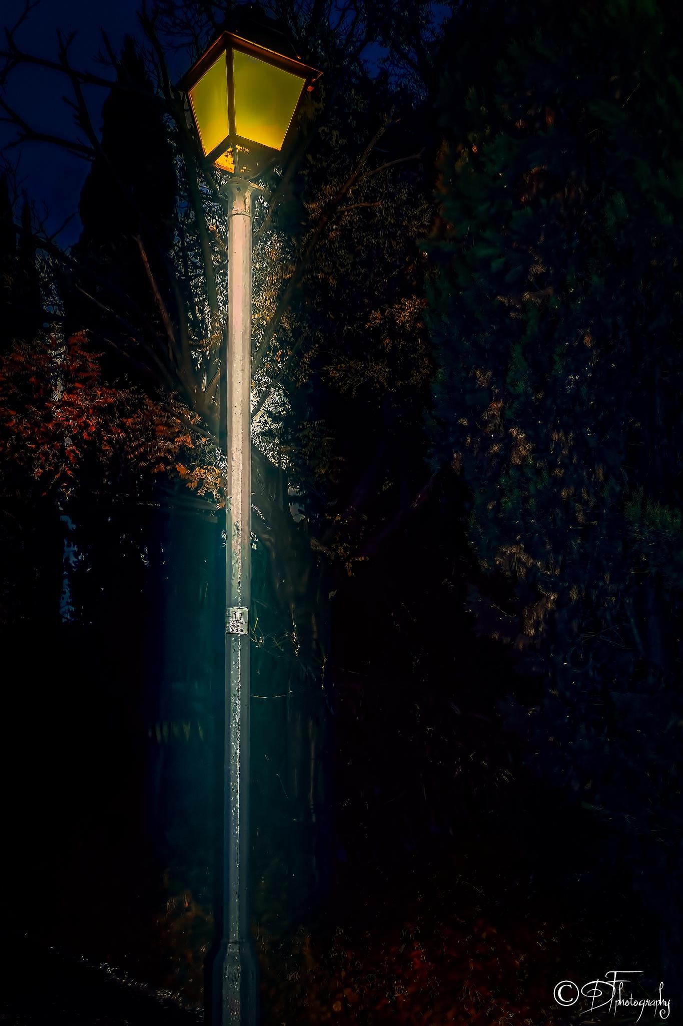 street lamp by DANIEL F