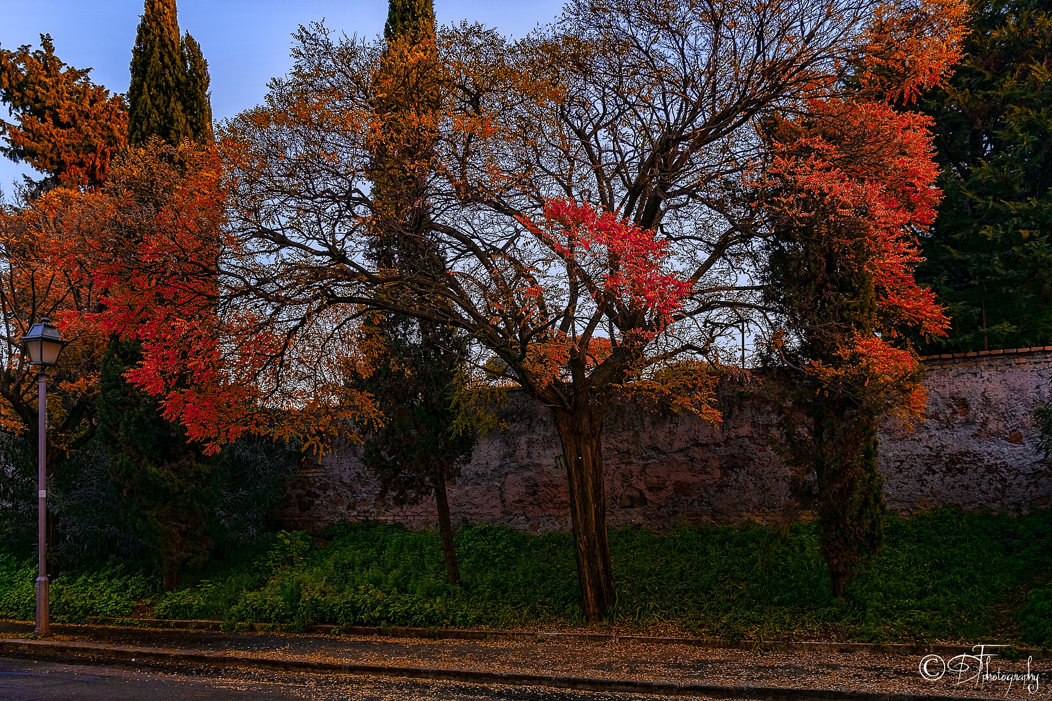 Photo in Street Photography #street #tree #wall #swaord #rome #italy