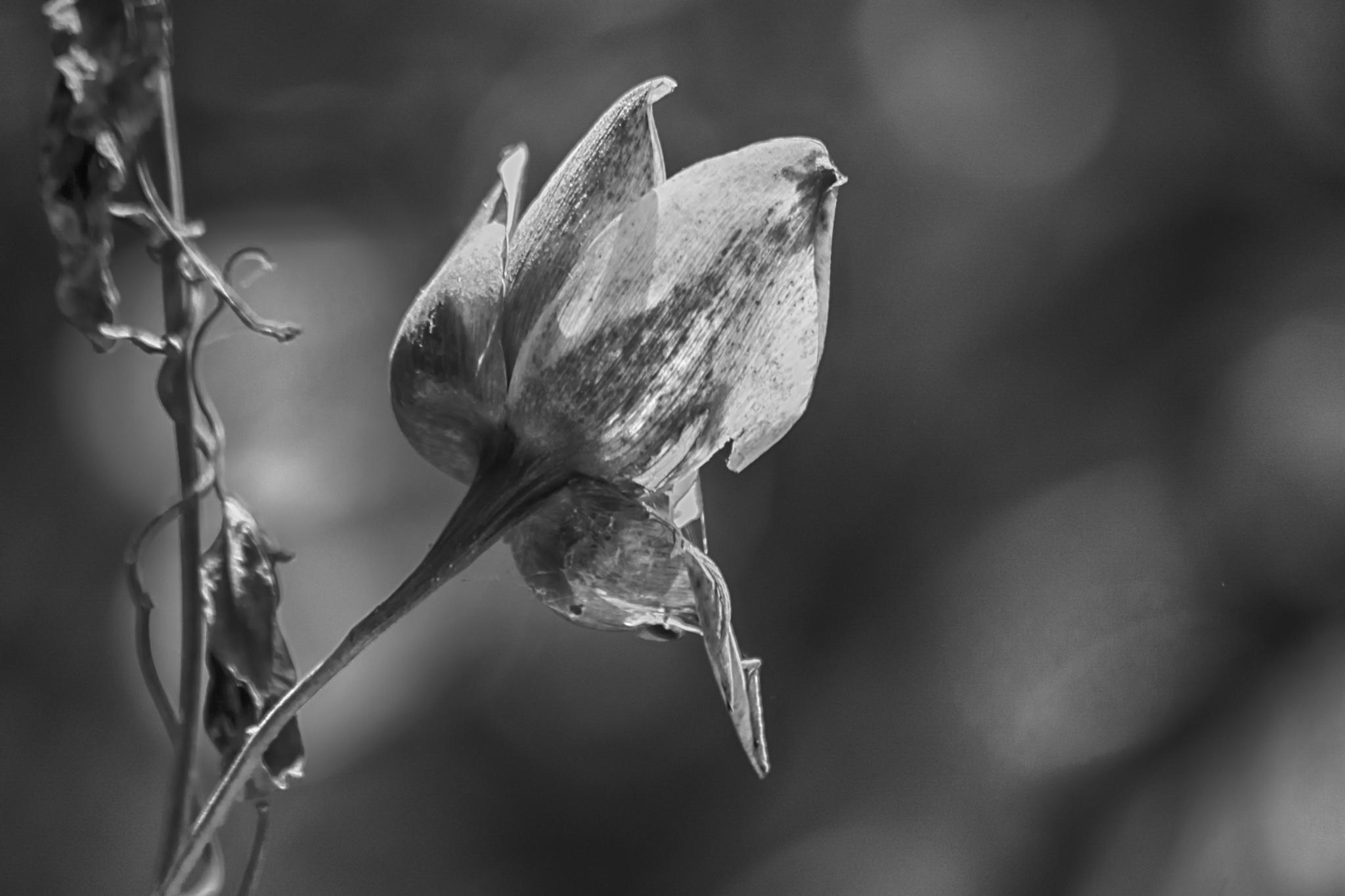 Death/Morte/Muerte by Jose Liborio