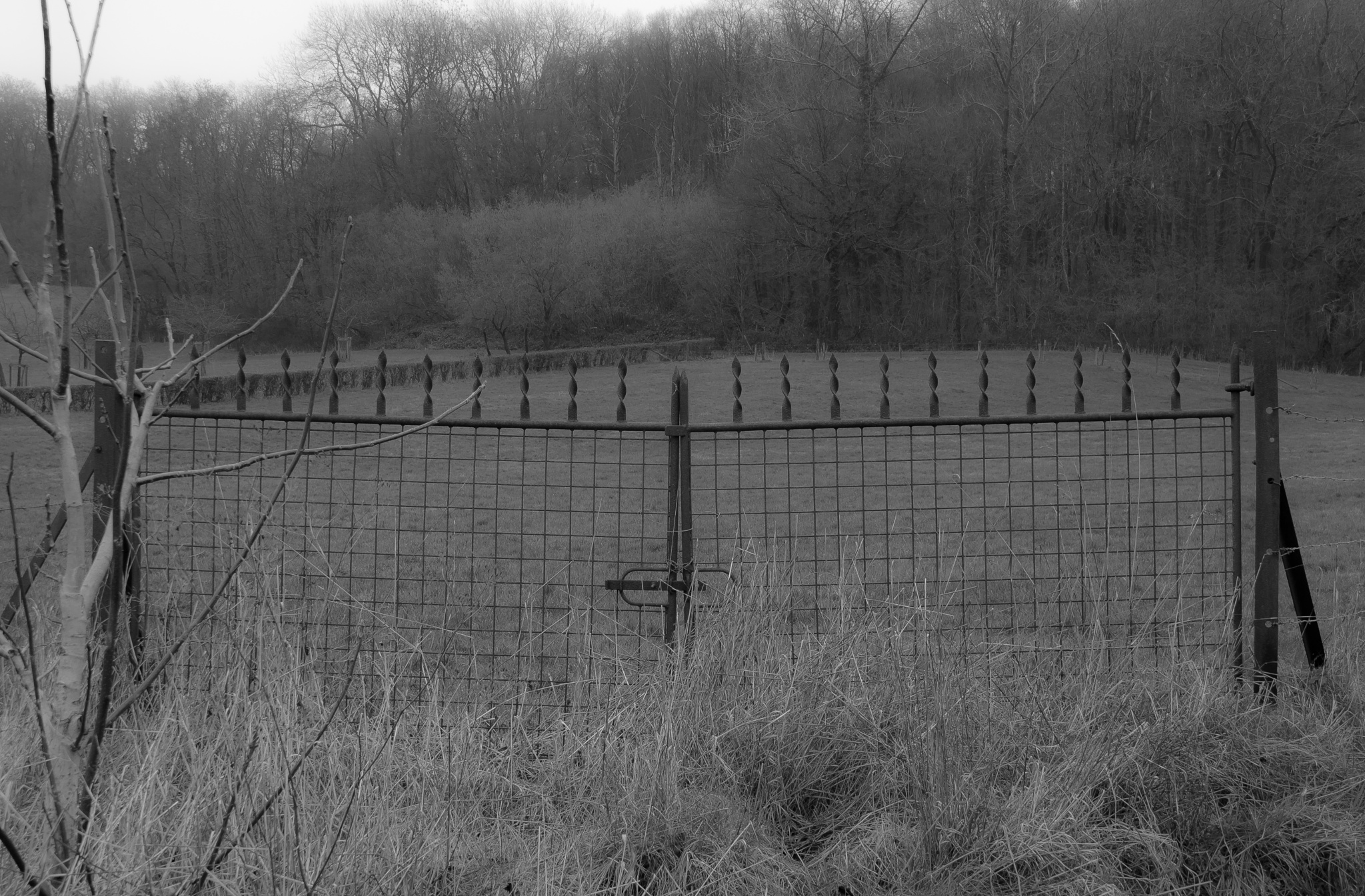 The fence by rvanhegelsom