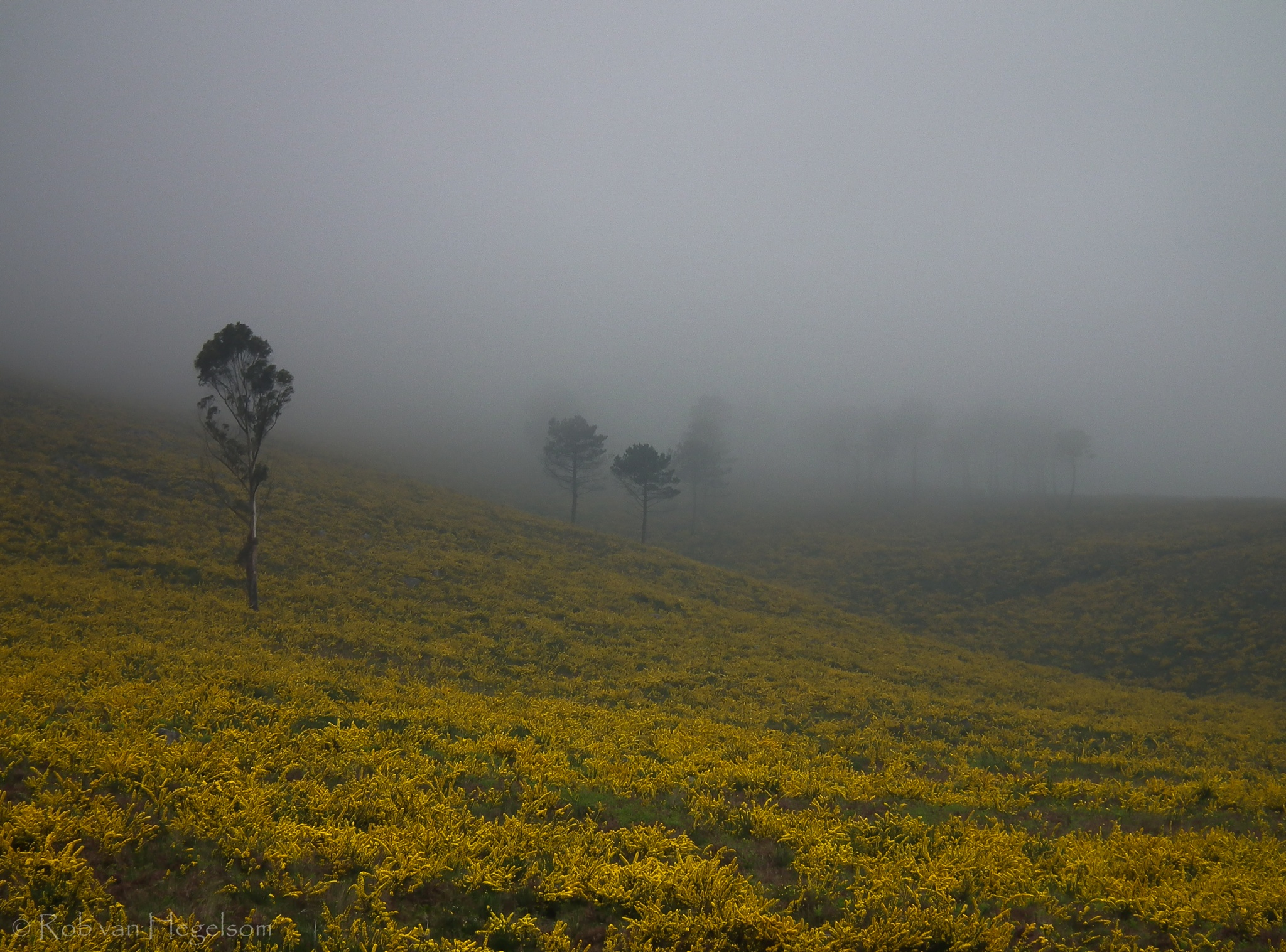Misty morning by rvanhegelsom