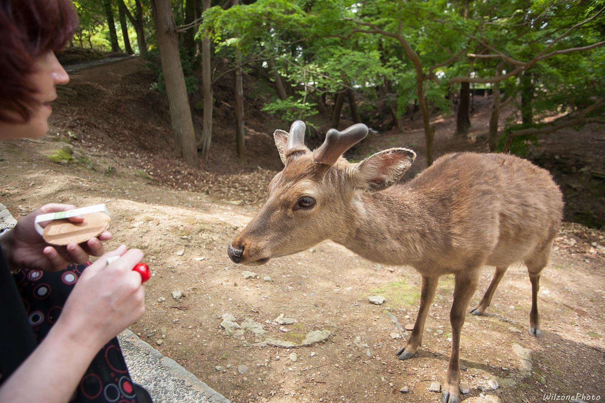 Photo in Animal #wilzonephoto #nara #japon #japan #nihon