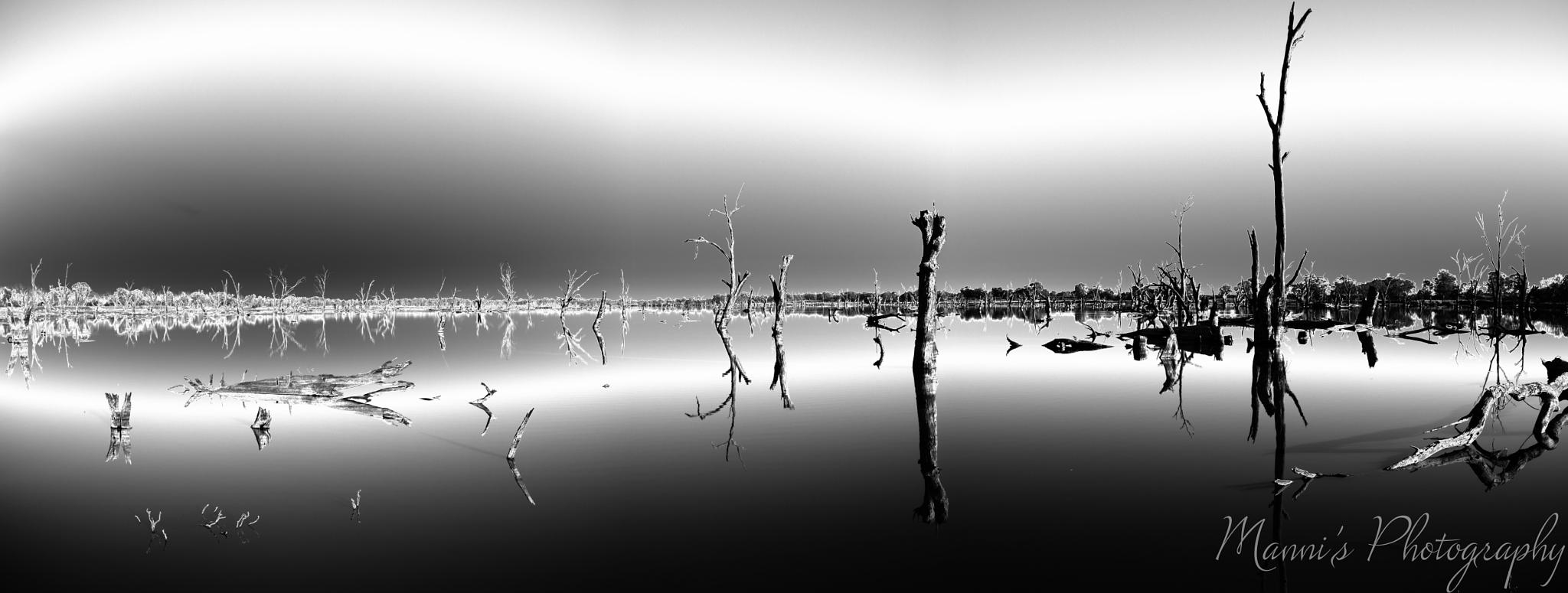 Photo in Black and White #swamp #black and white #riverland #outback #infrared #water #australia #south australia
