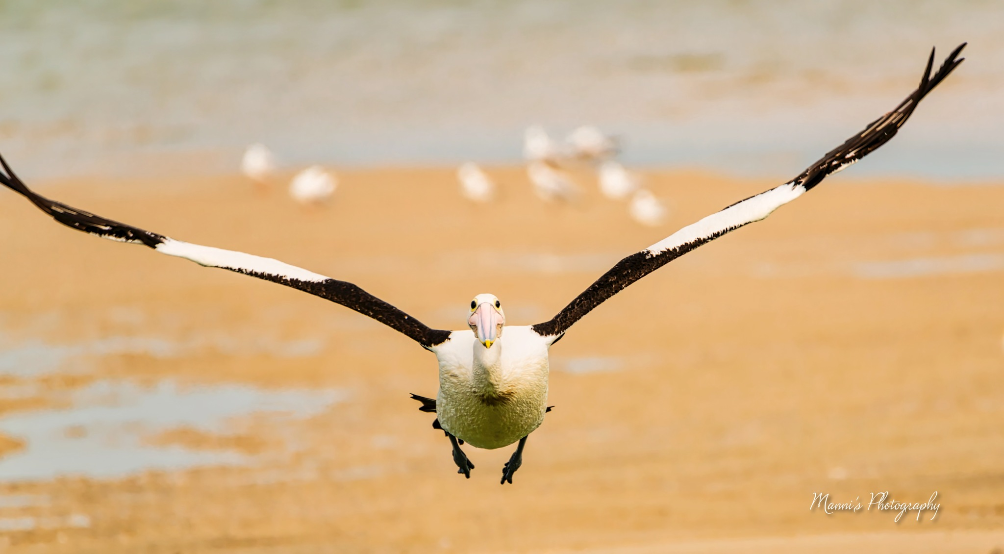 Flying by Manni