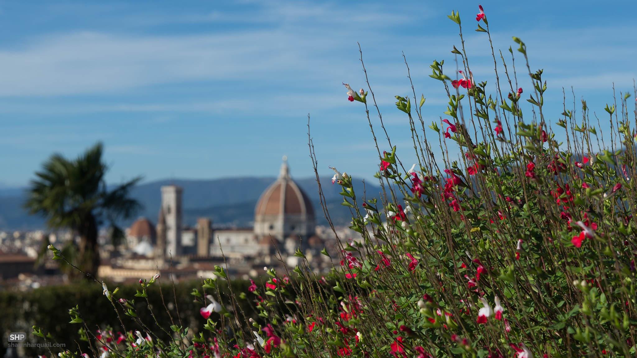 The Duomo by Shawn Harquail