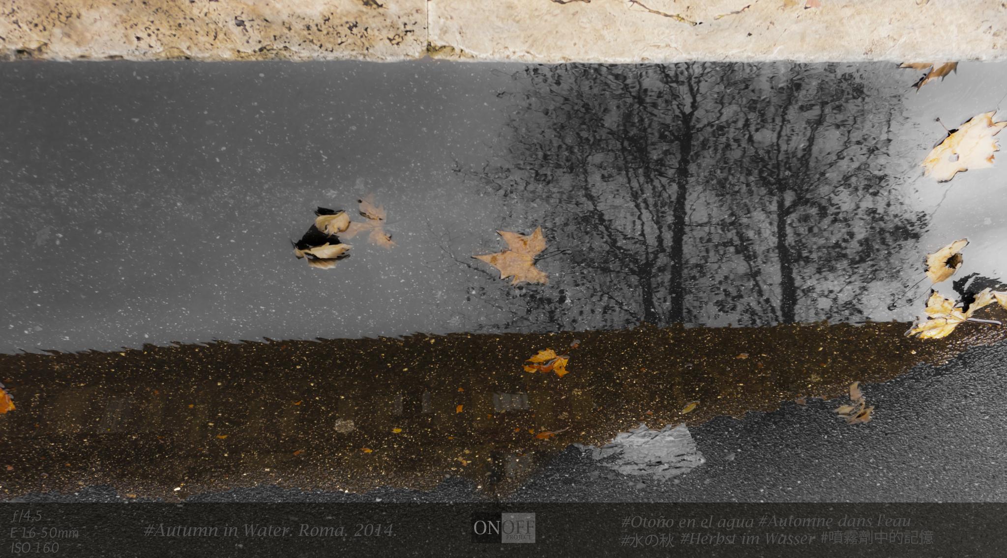 Photo in Street Photography #water #autumn #rain
