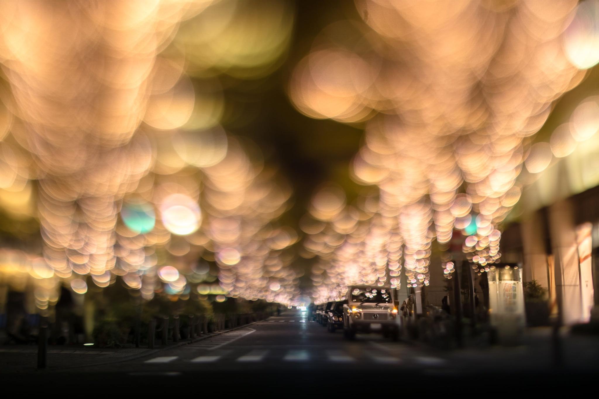 row of trees by takashi kitajima