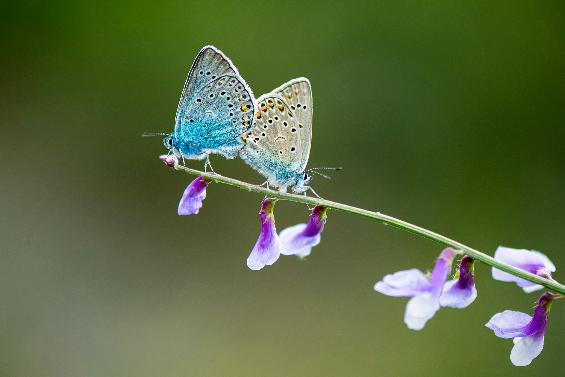 Photo in Nature #butterfly #love #nature #double beauties #macro