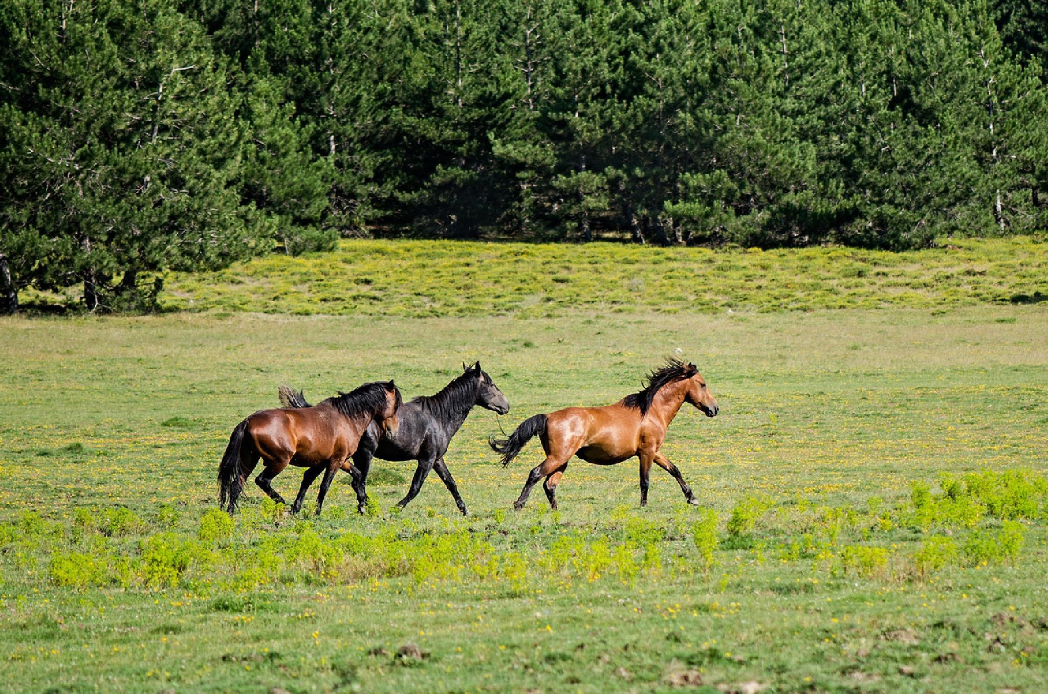 Mustangs by Sedat Buga