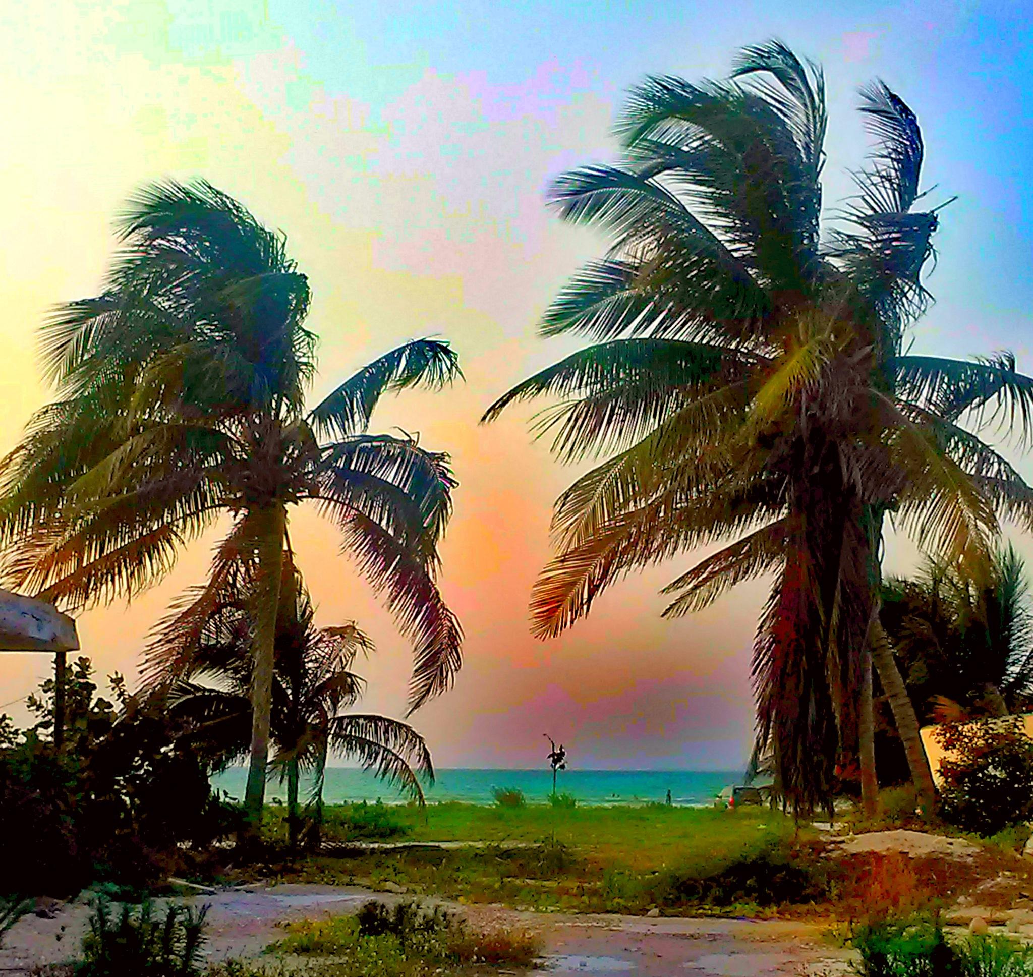 paradise by Reid Allan Hanson