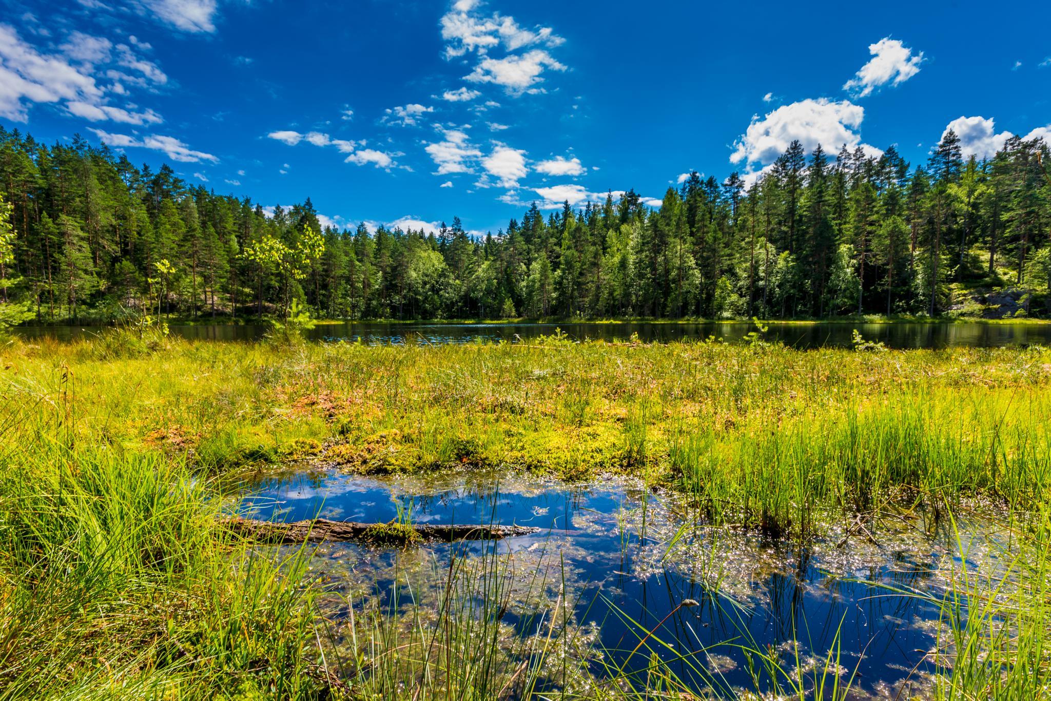 Swamp lake, Finland by Matti