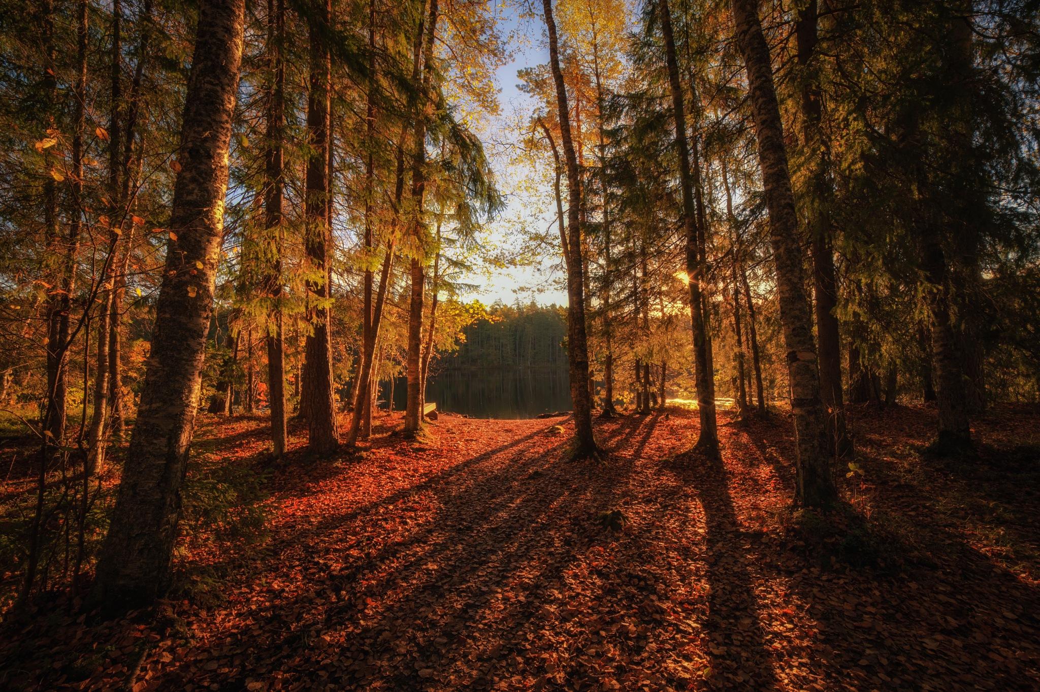 Autumn Light by Matti