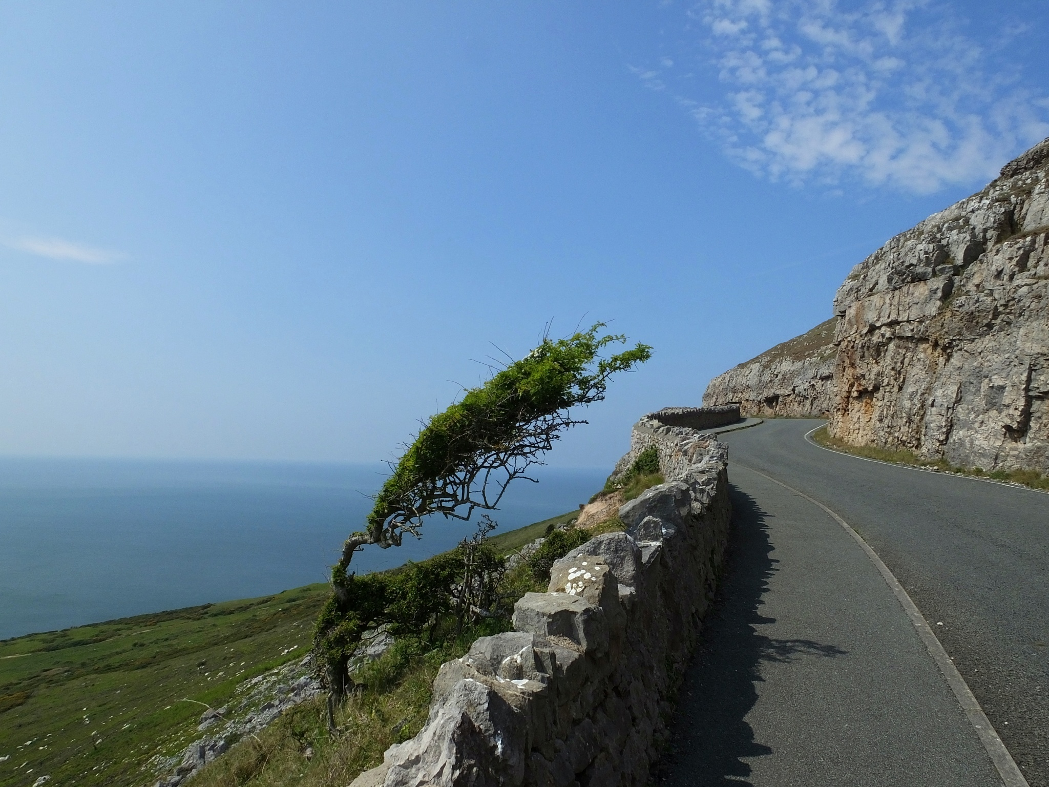 Photo in Landscape #trees #great orme #wales #coast