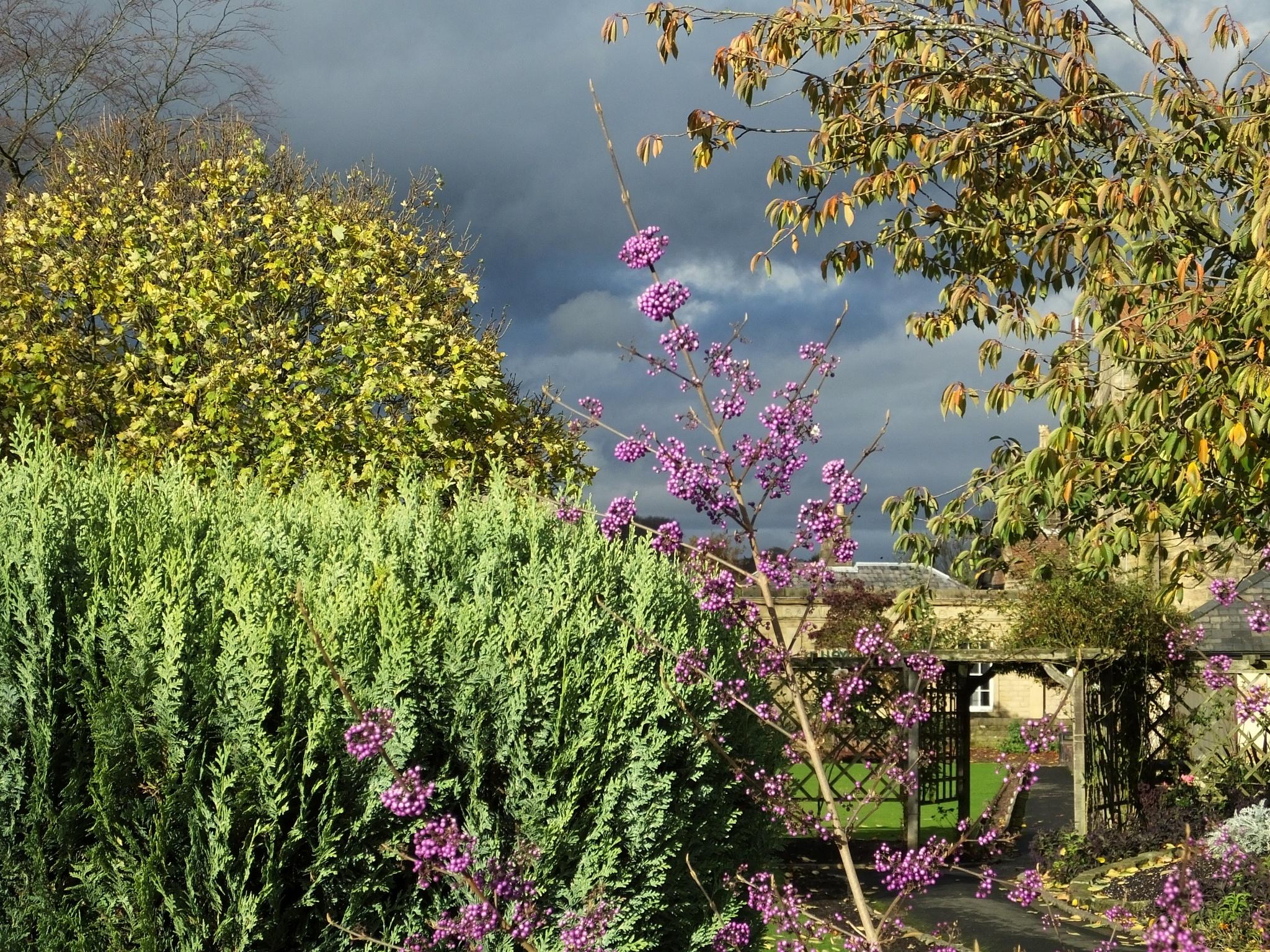 November Garden by ianmoorcroft