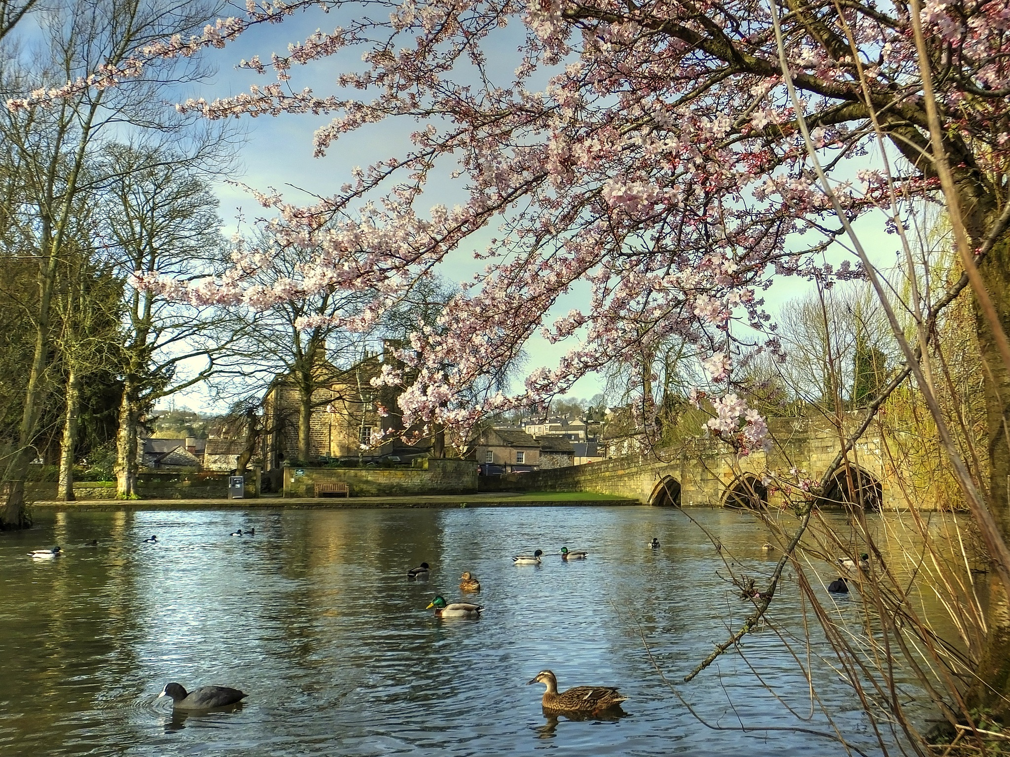 Spring Has Sprung by ianmoorcroft