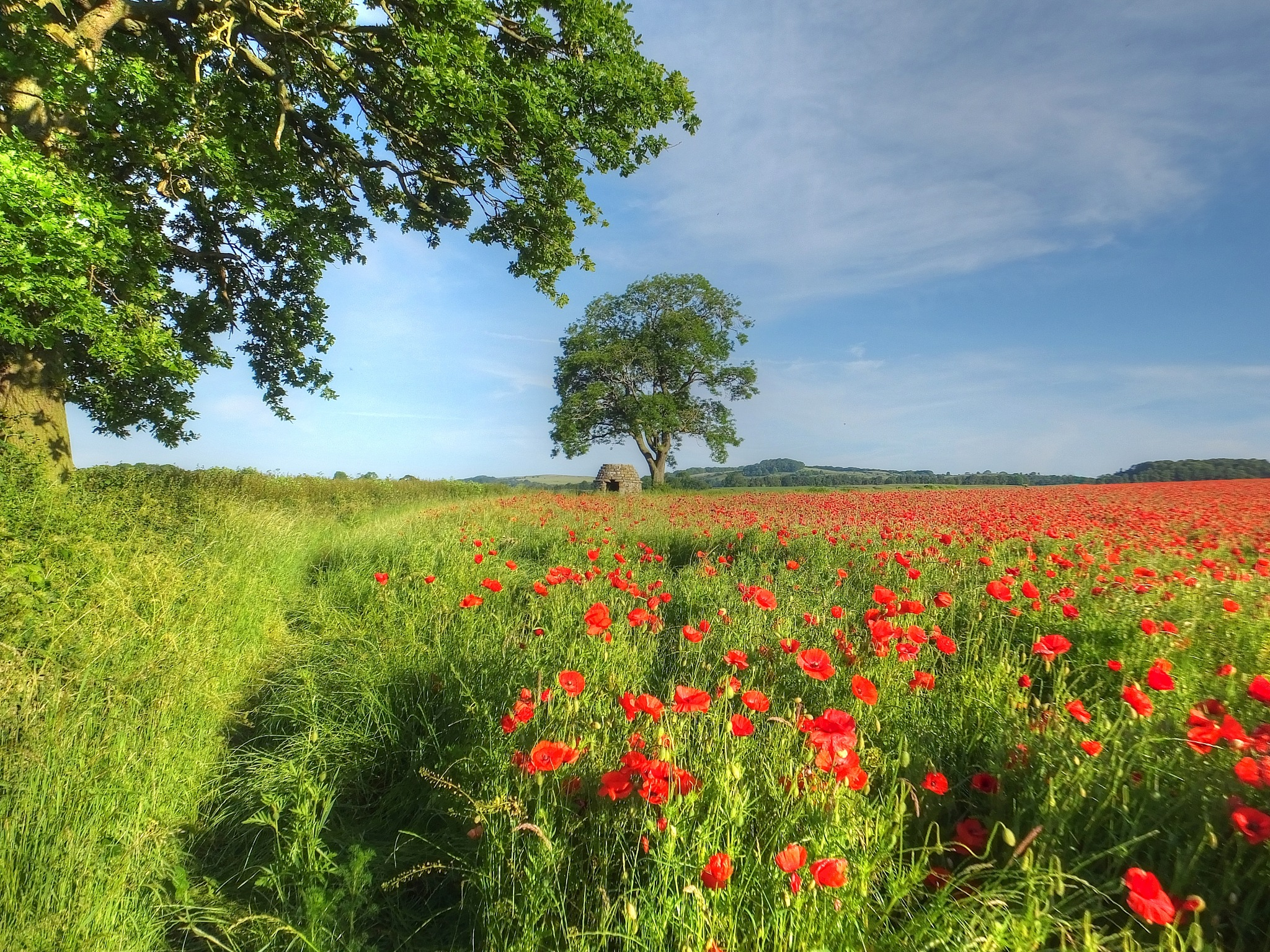 Field of Red by ianmoorcroft