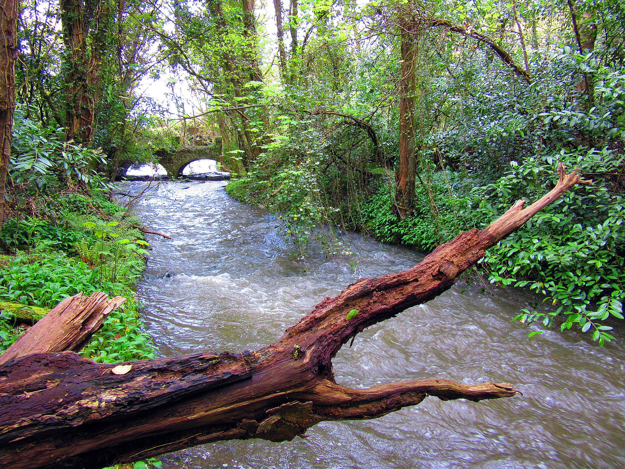 Photo in Nature #brackentown #old mill #bridge #canal #the ward river #flood #nature #woods #trees #river #forest #swords