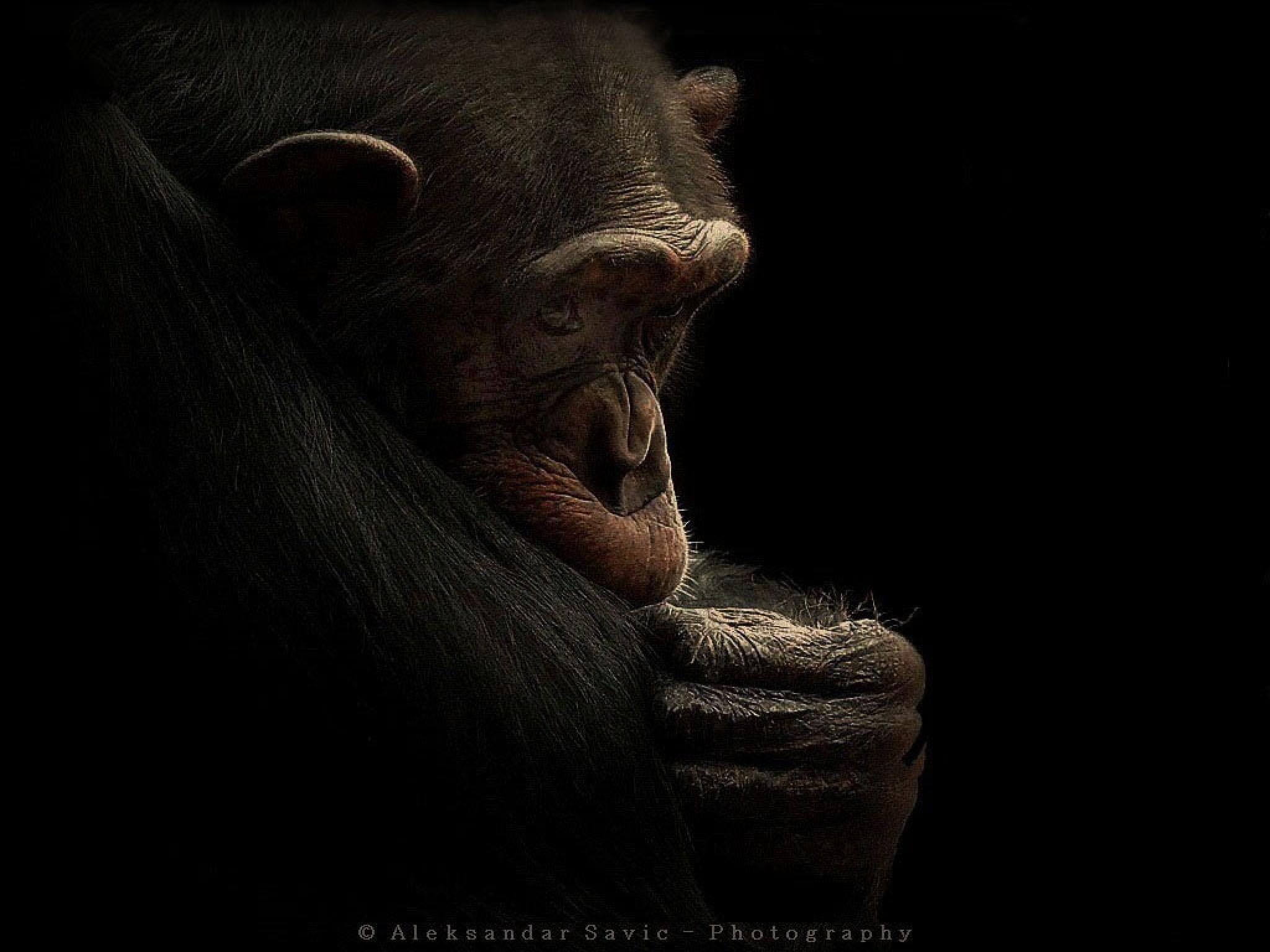 Almost Human by Aleksandar Savic