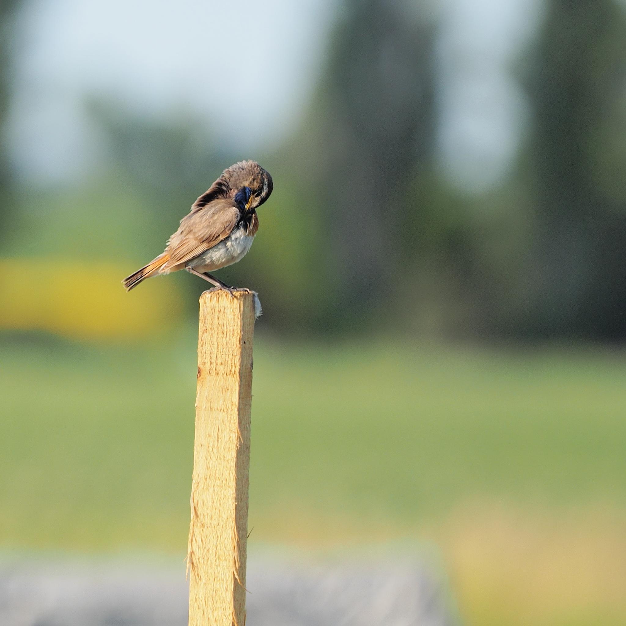 Photo in Random #bird #chiffchaff #animal #wildlife #closeup #birds