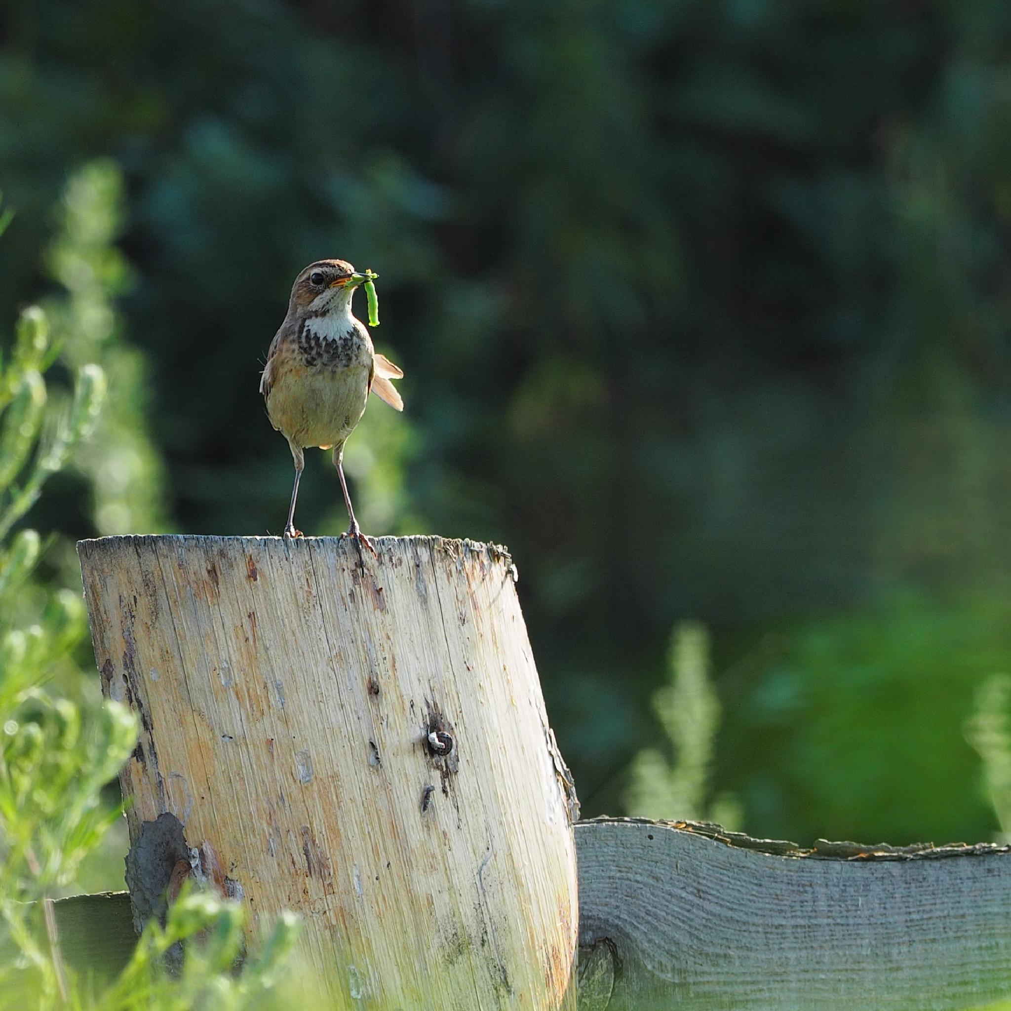 Photo in Animal #bird #larva #eating #animals