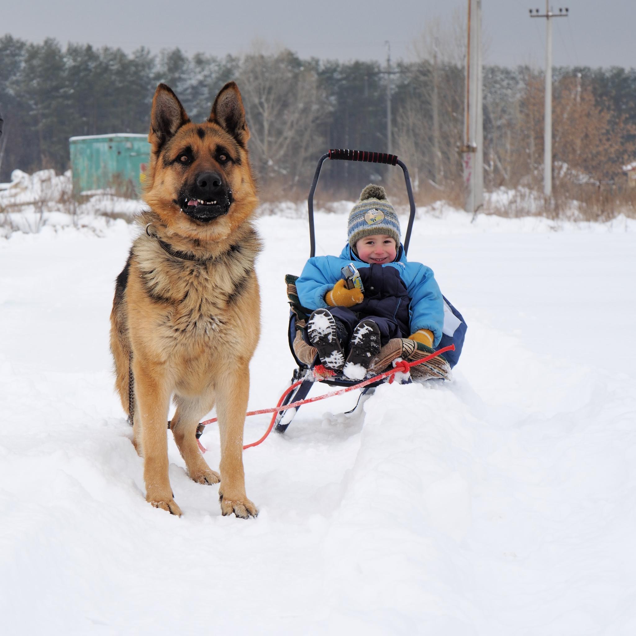 Photo in Animal #german shepherd #dog #boy