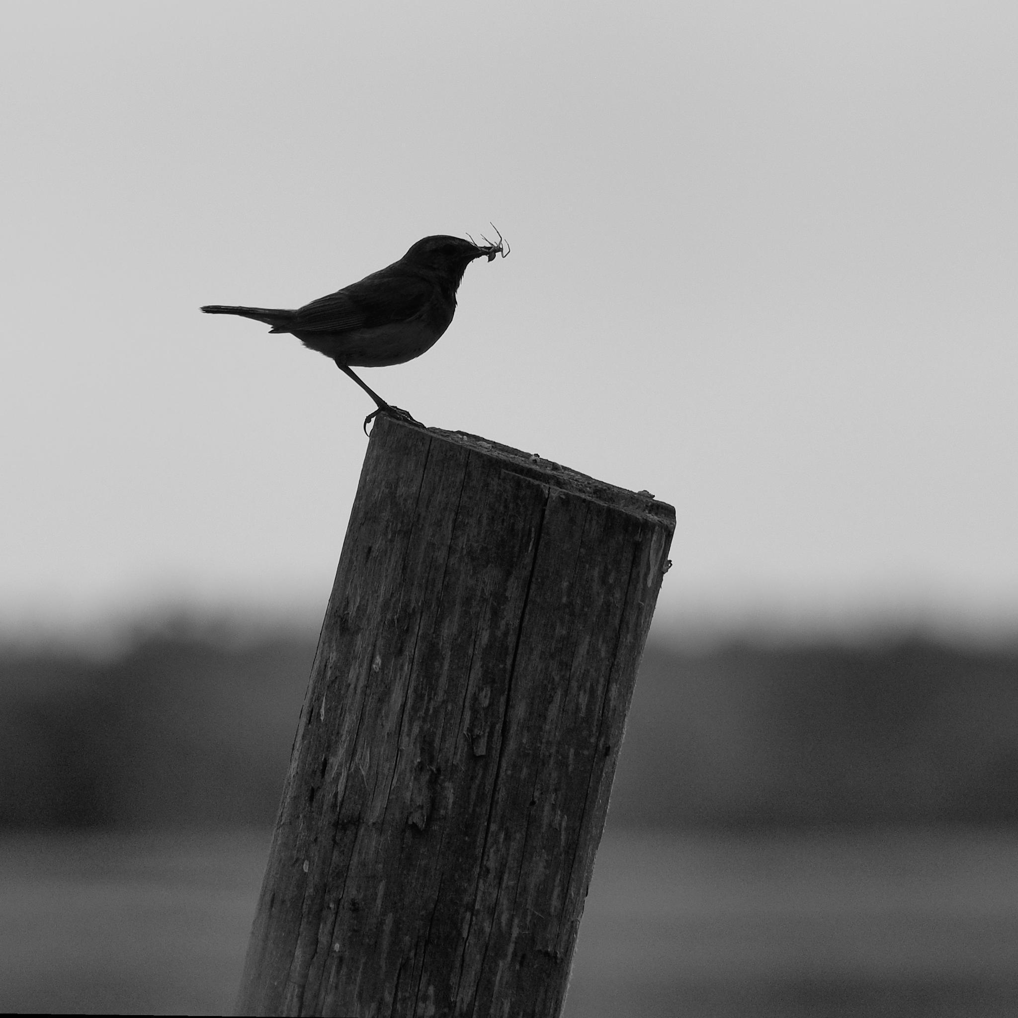 In the beak by Igor Marach