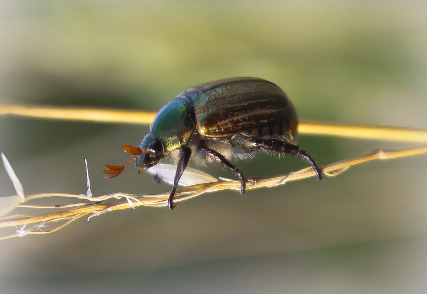 insects by Cesare Vatrano