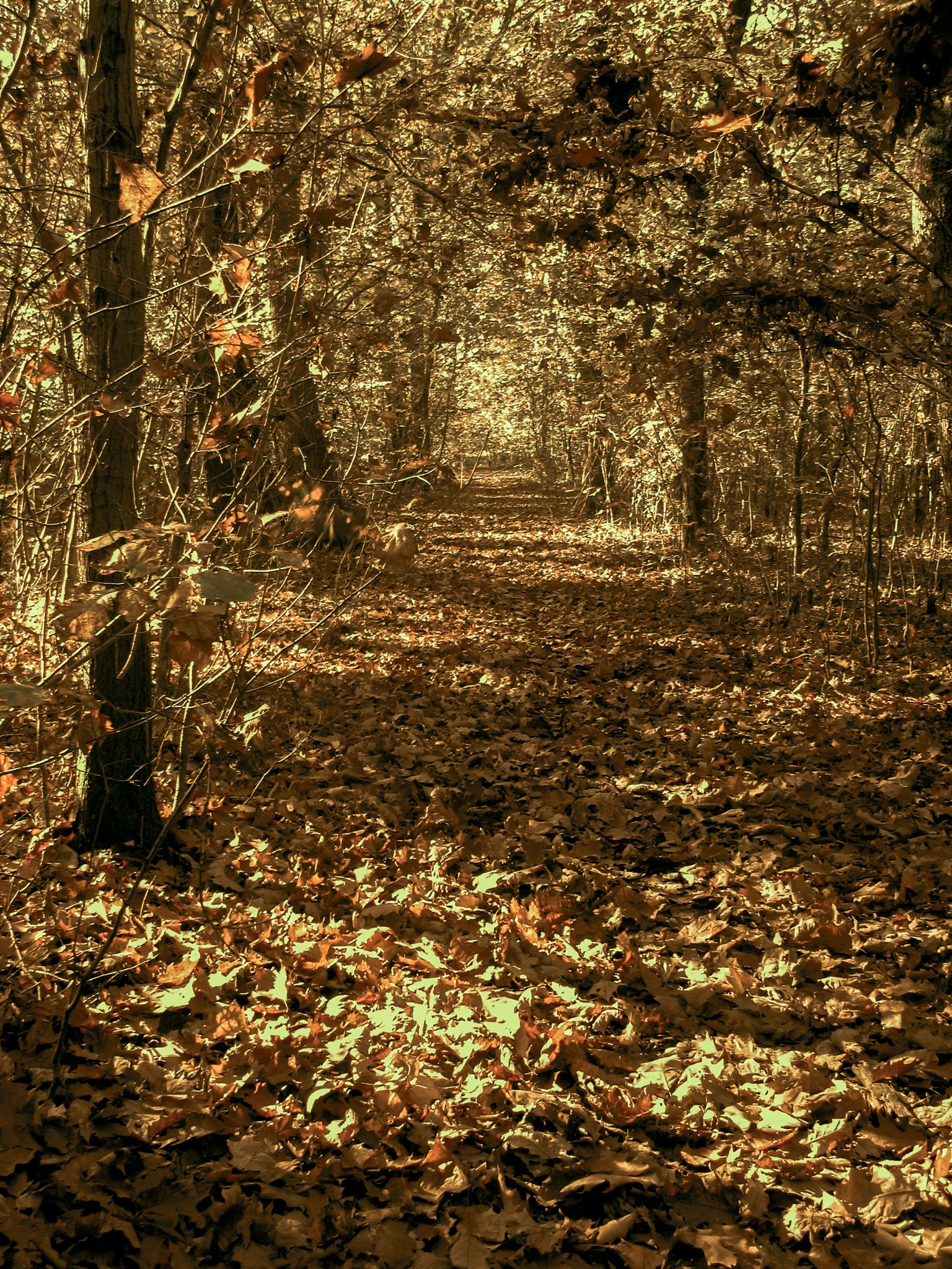 woods, leaves, light by Cesare Vatrano