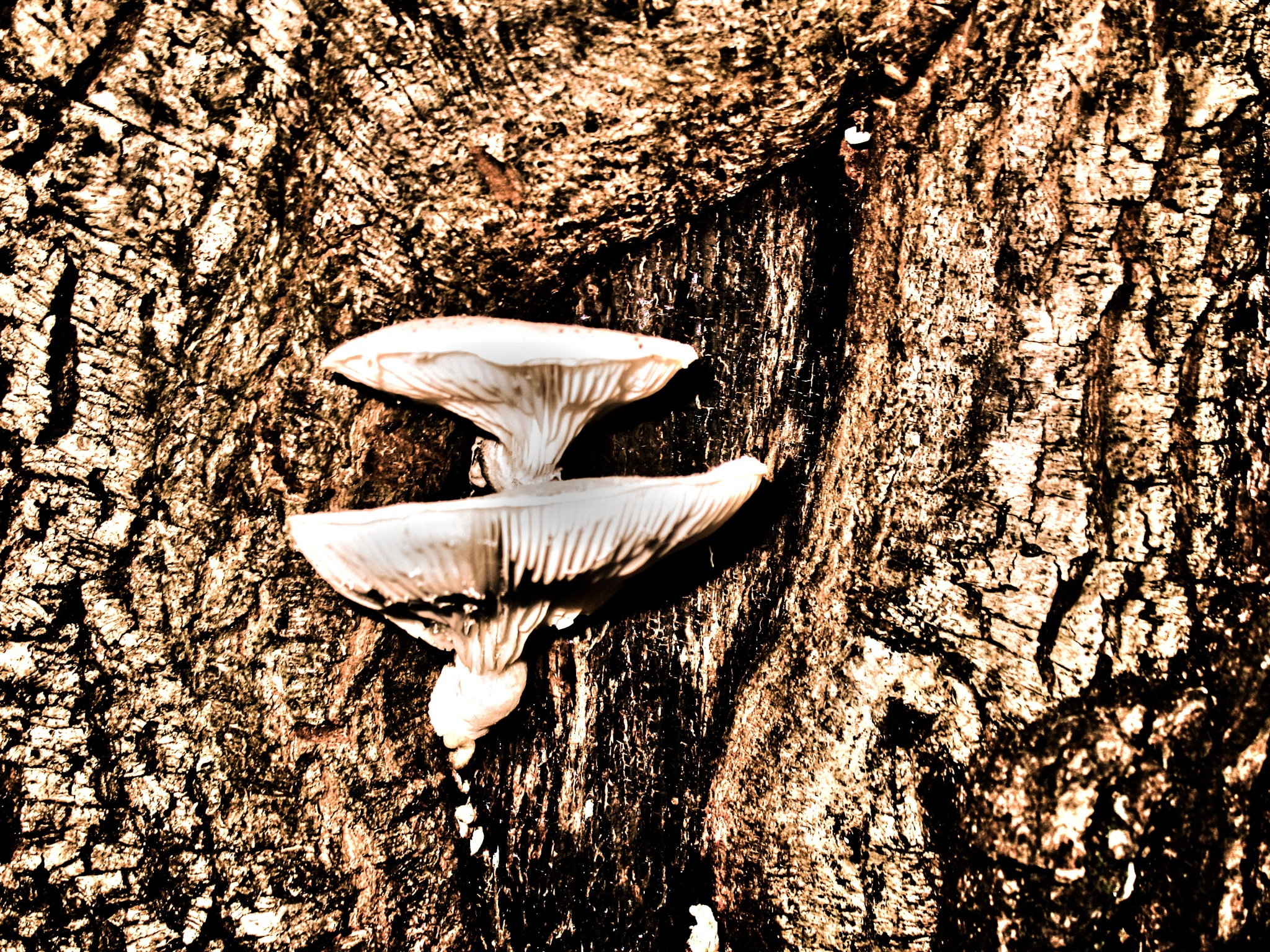 mushrooms from trunk by Cesare Vatrano