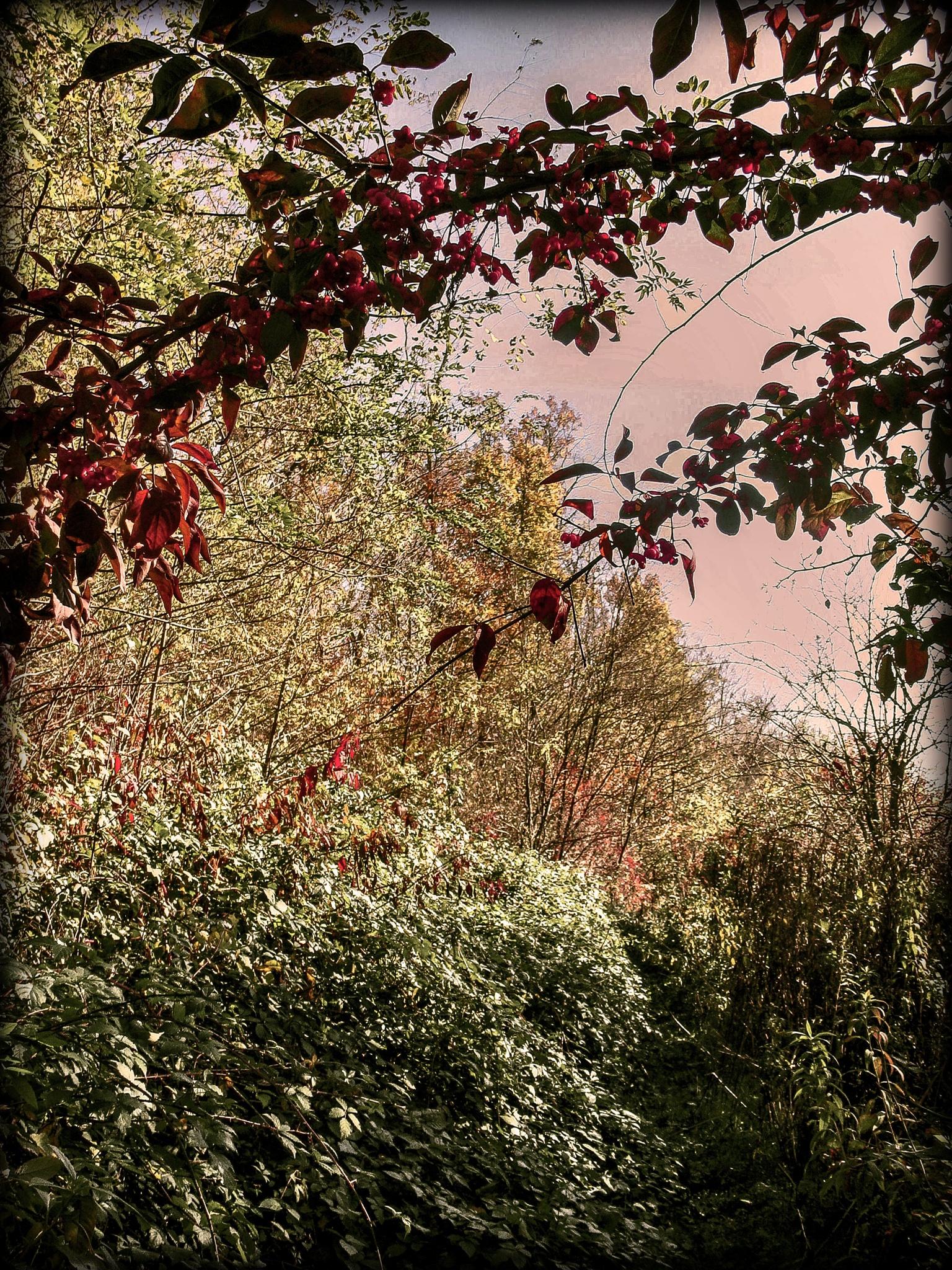trees and bushes by Cesare Vatrano