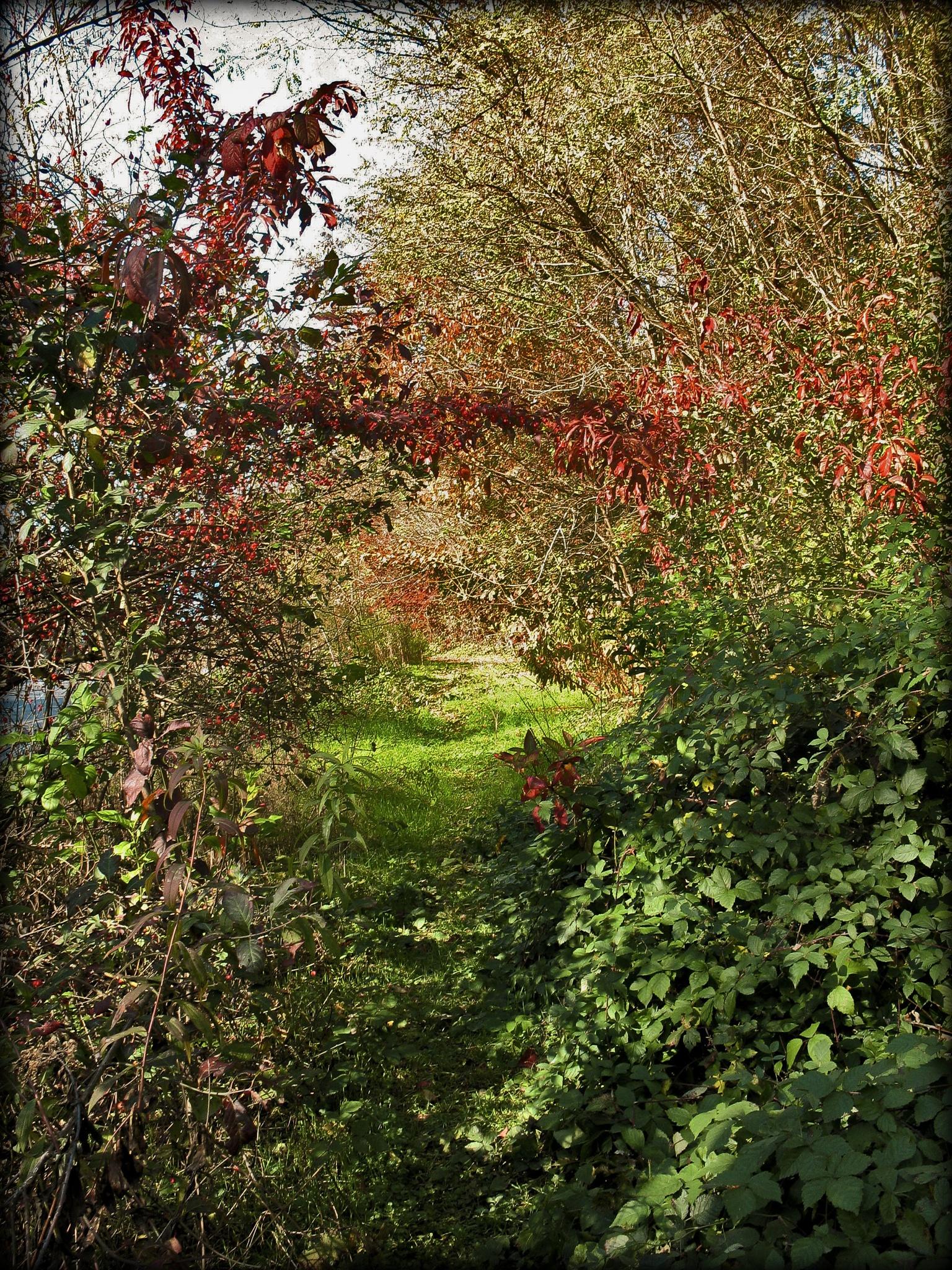 bushes in the autumn by Cesare Vatrano