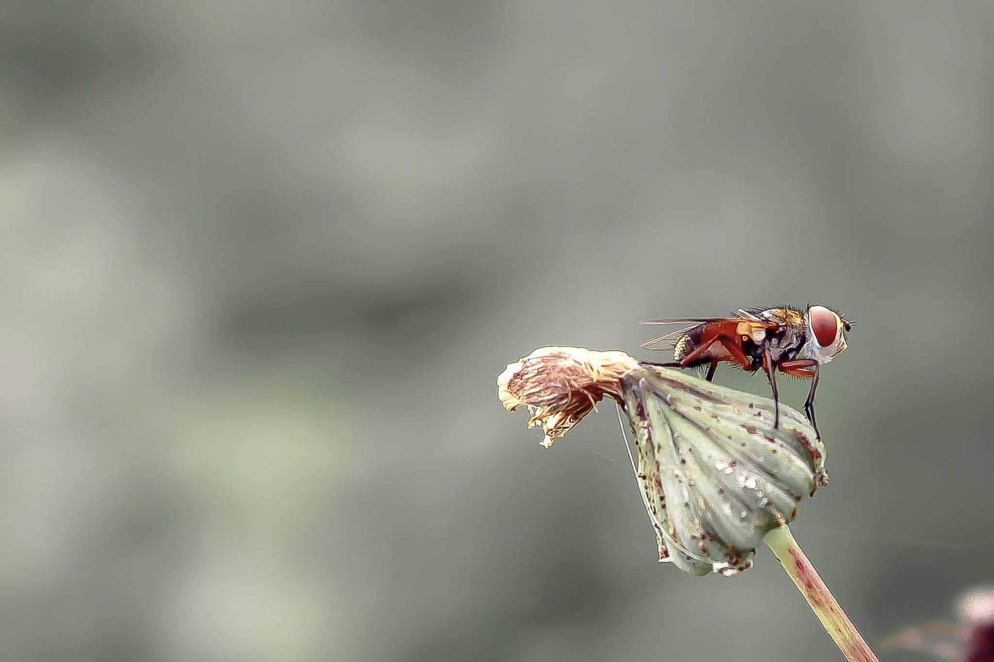 the fly by Cesare Vatrano