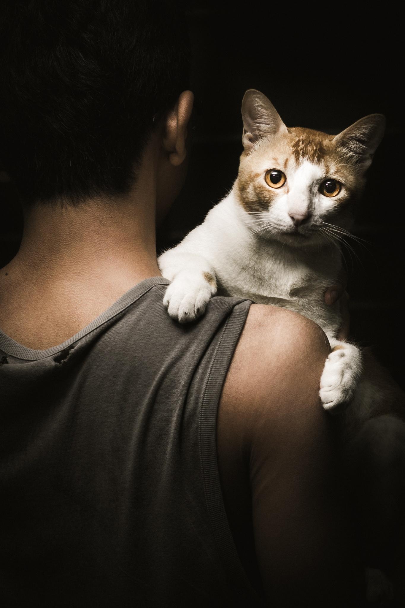 Cat n Soldier by Sane