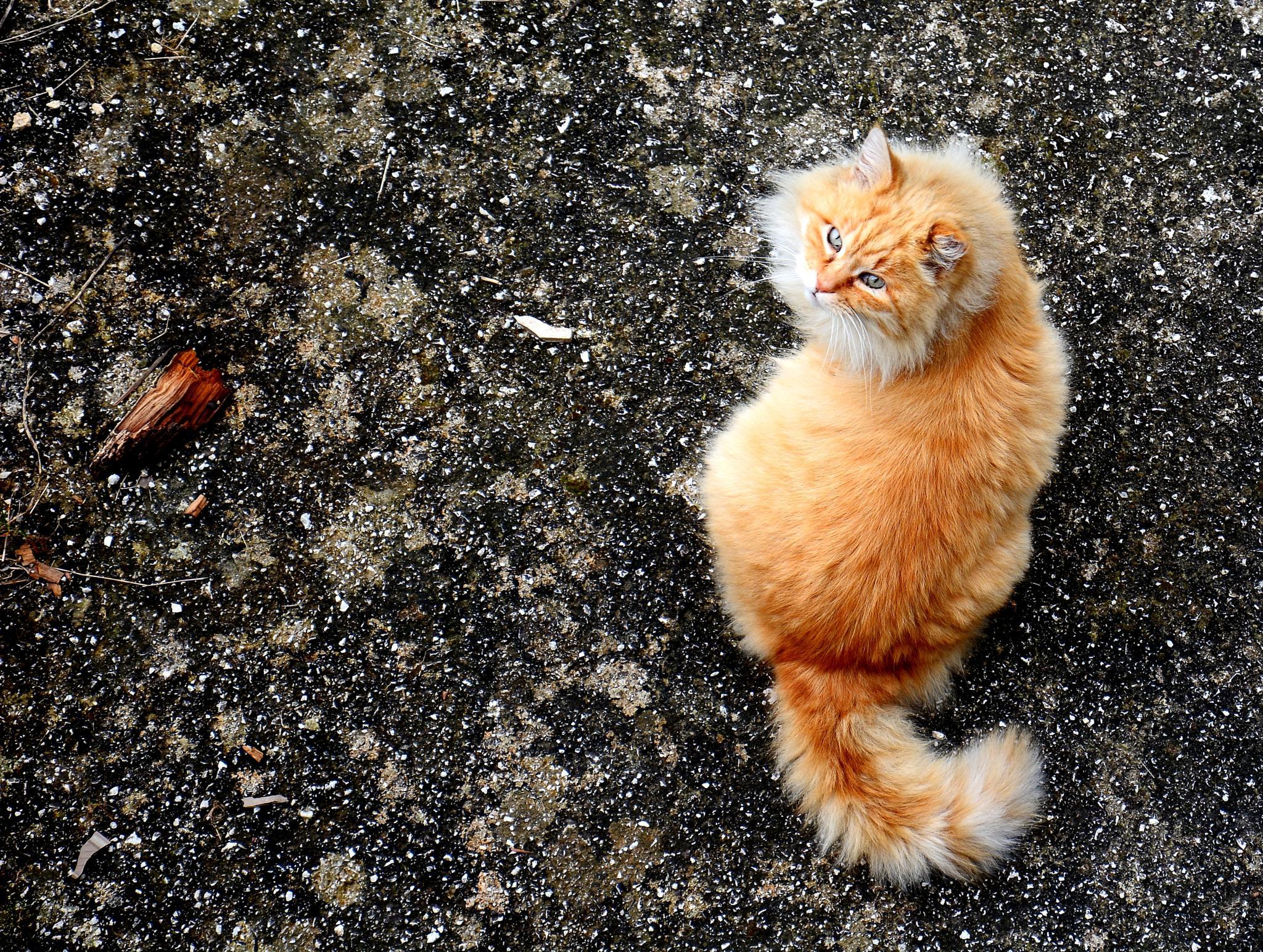 Photo in Animal #cat