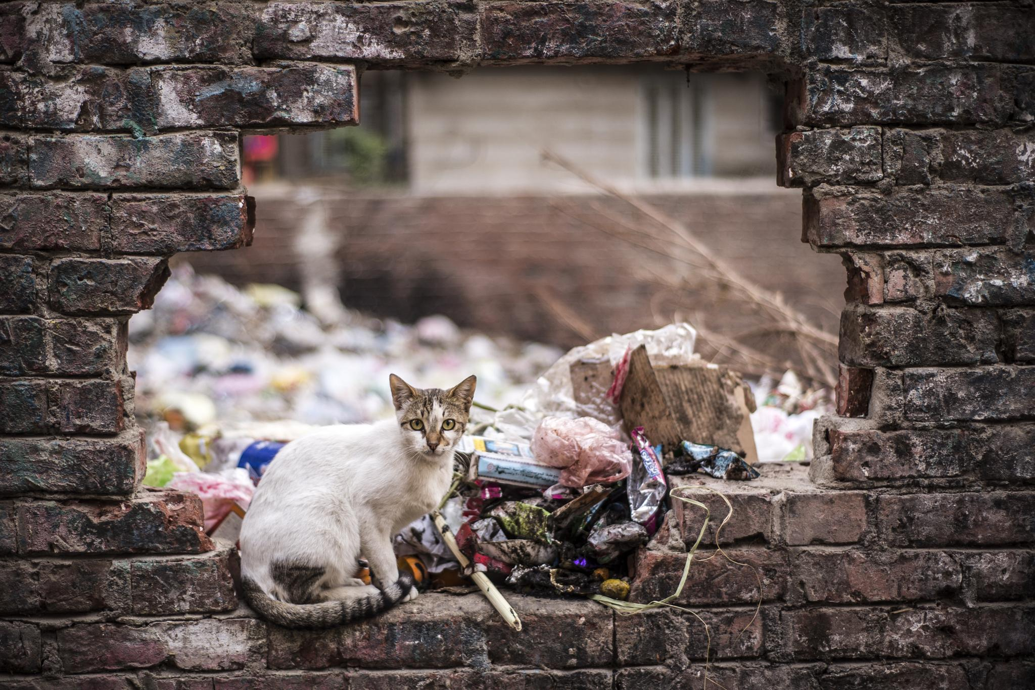 Photo in Street Photography #egypt #cat #rubbish #brick #wall #hole