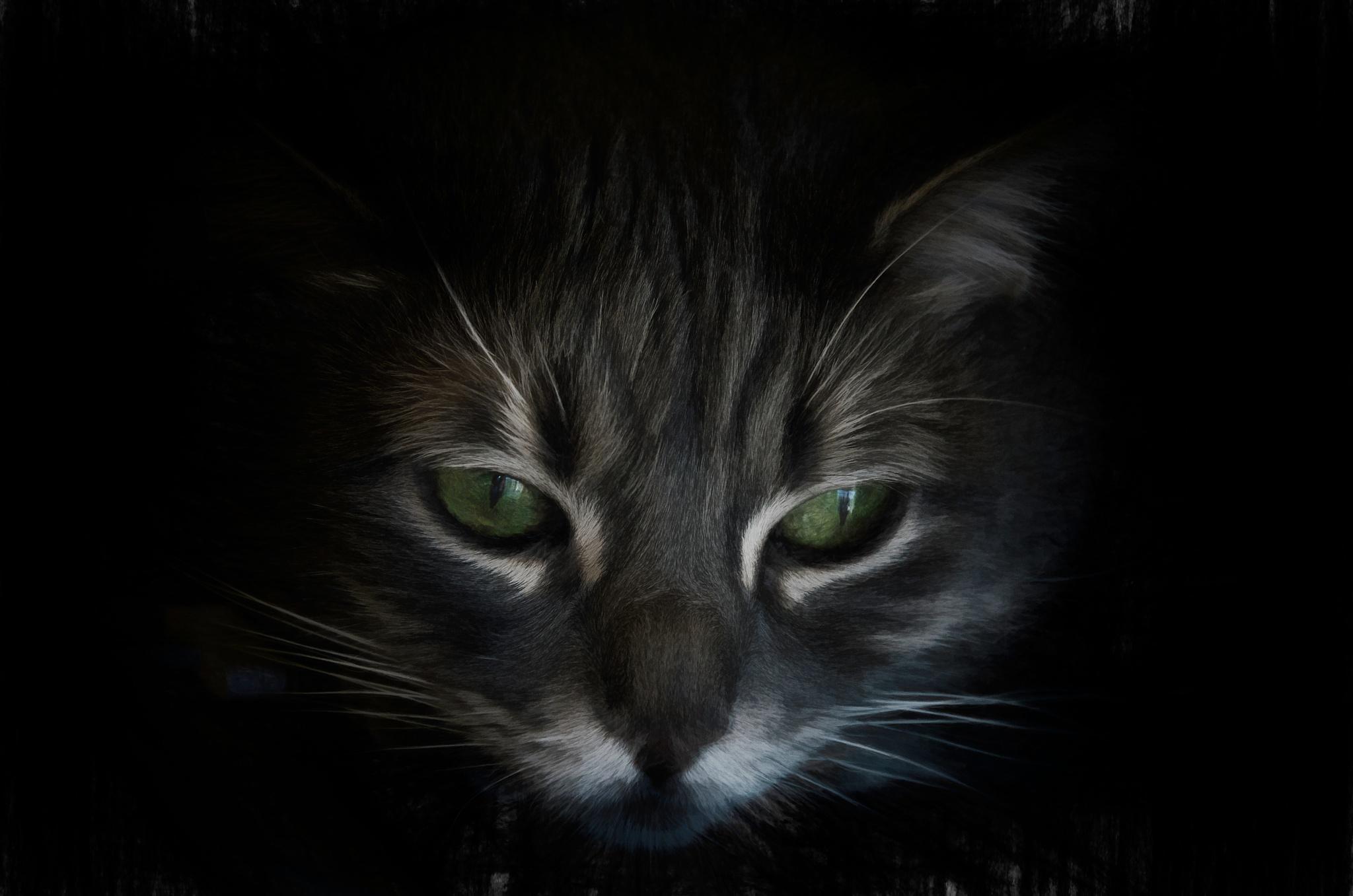 Cat Portrait 3 by JohnEllingson