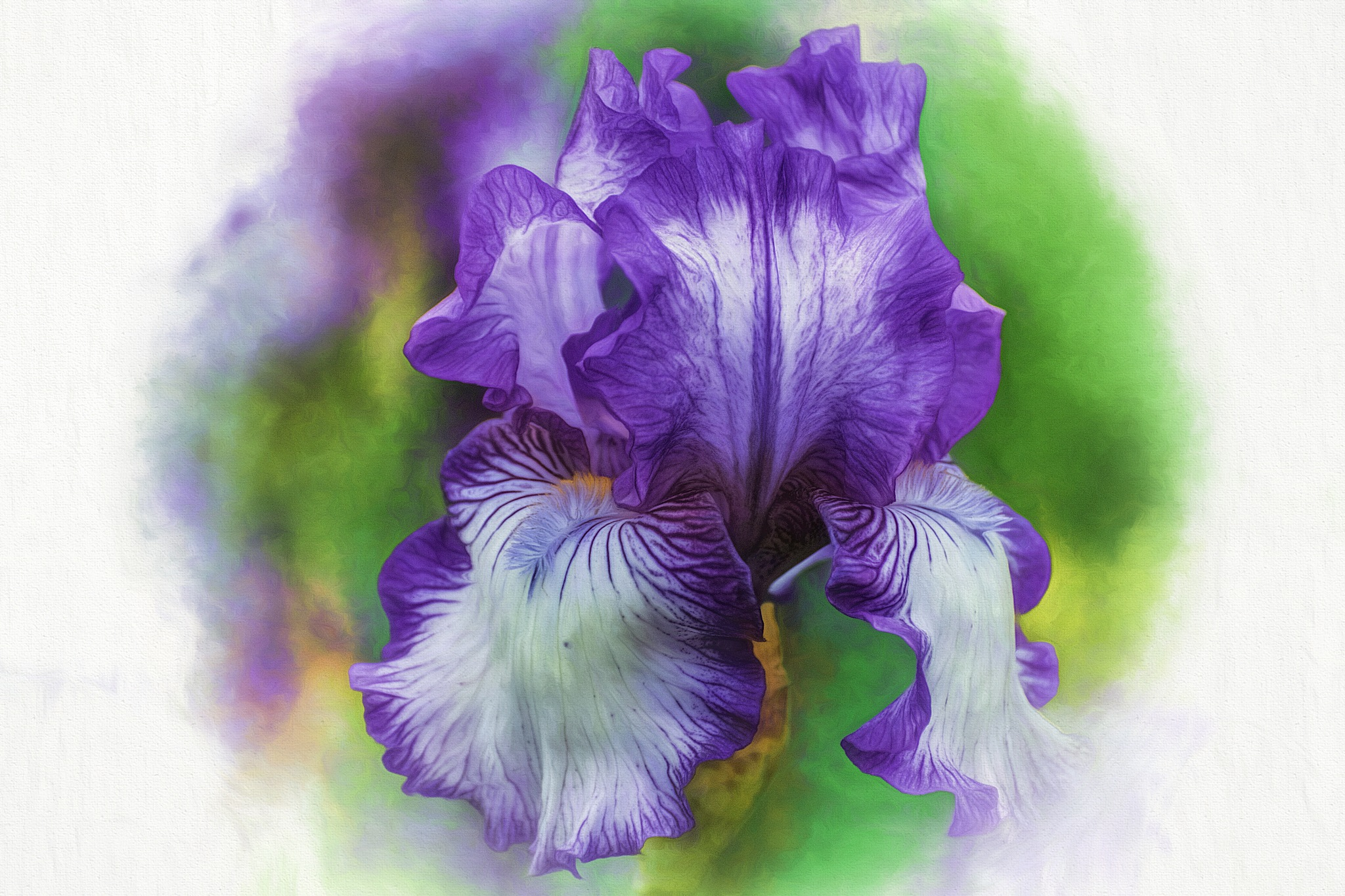 It's Iris Time Again 59 by JohnEllingson