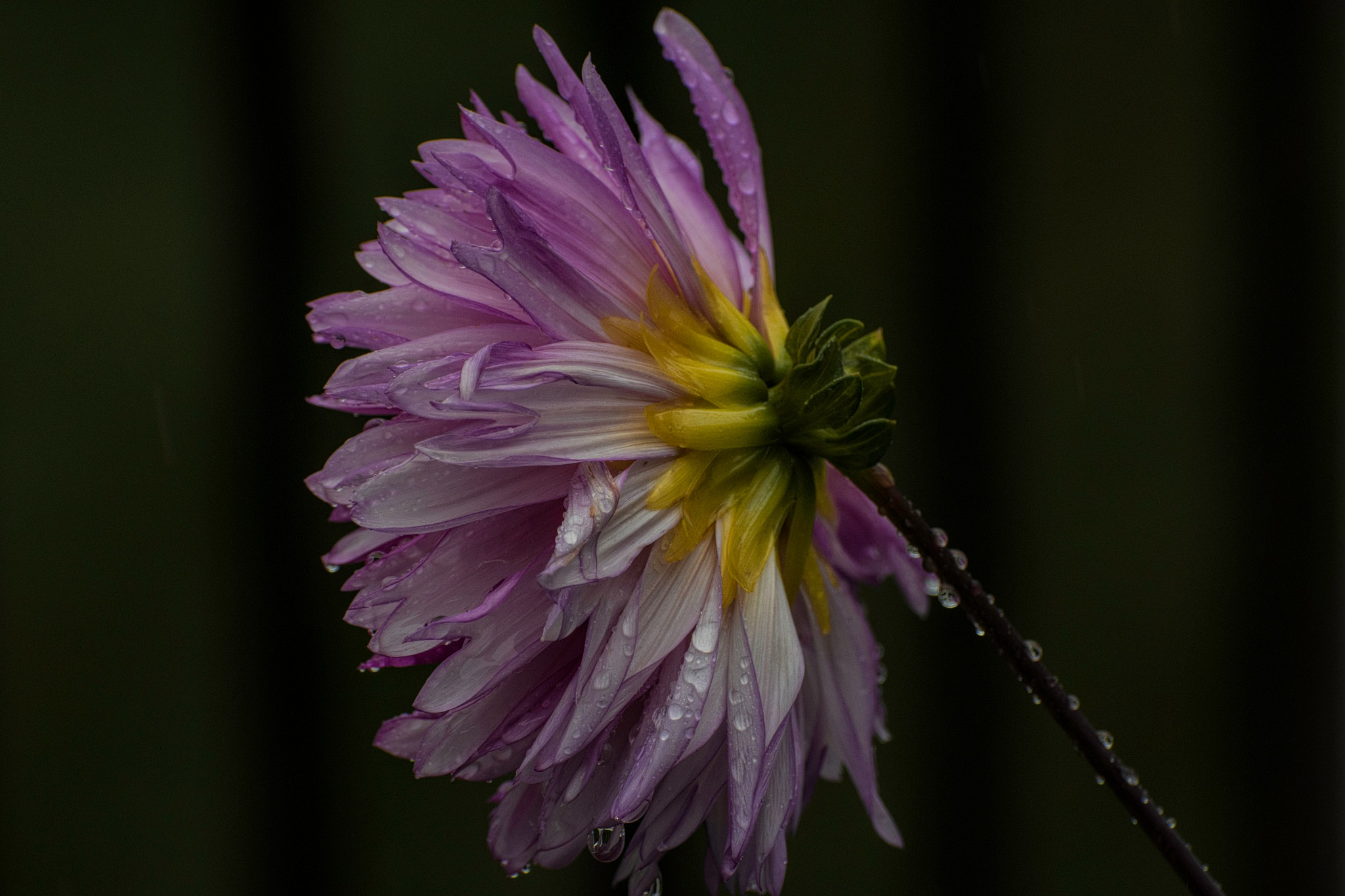 Flower 9-2-1 by JohnEllingson