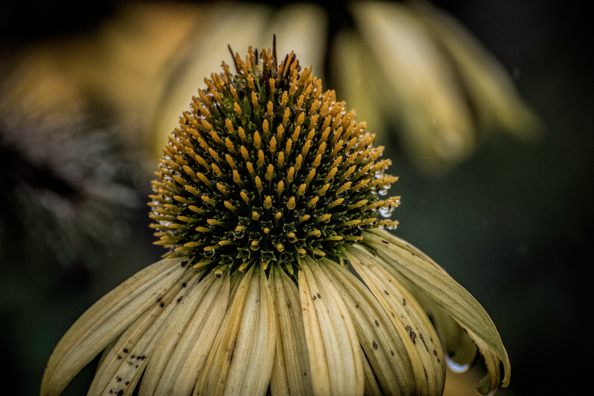 Flower 9-2-9 by JohnEllingson