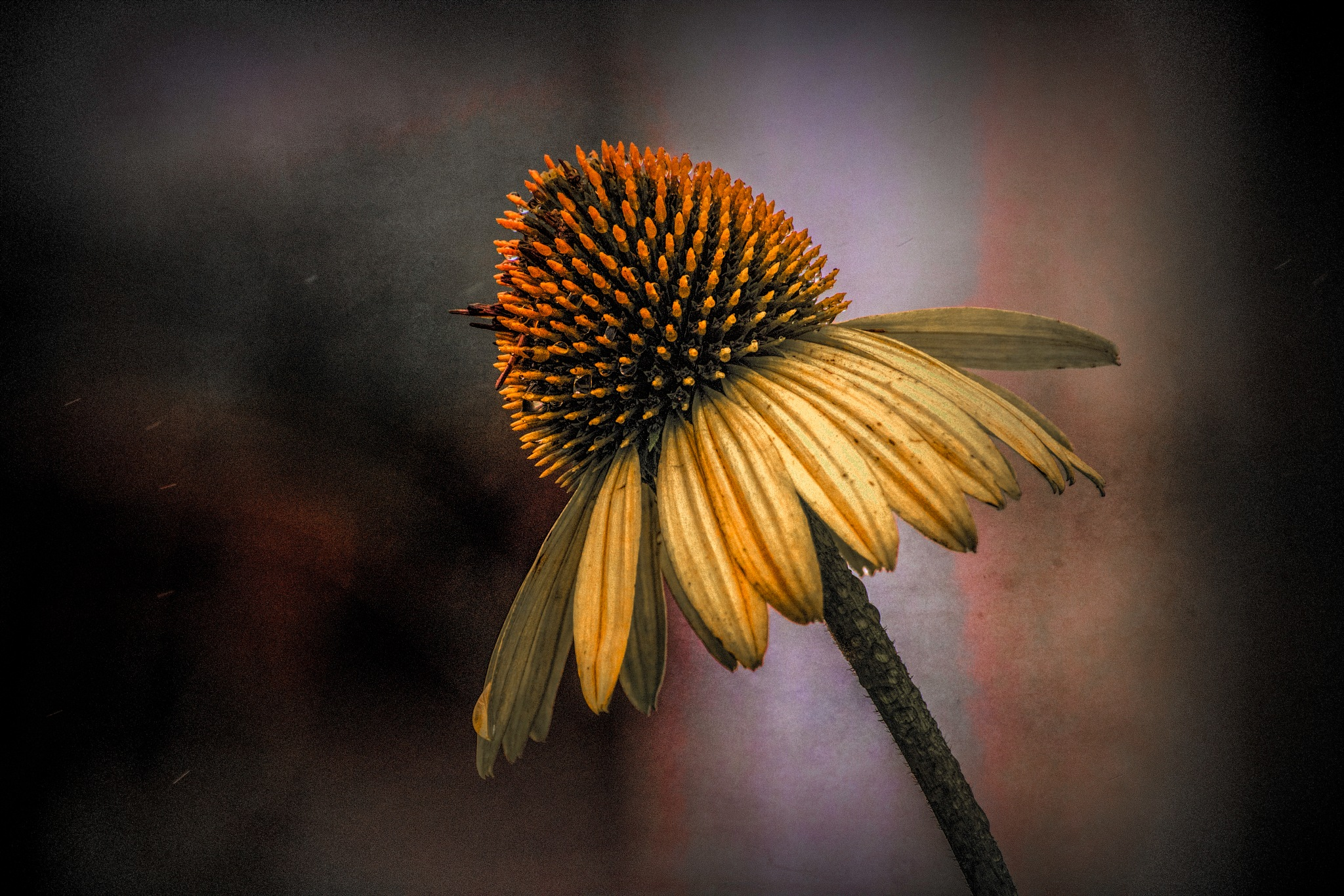 Flower 9-2-15 by JohnEllingson
