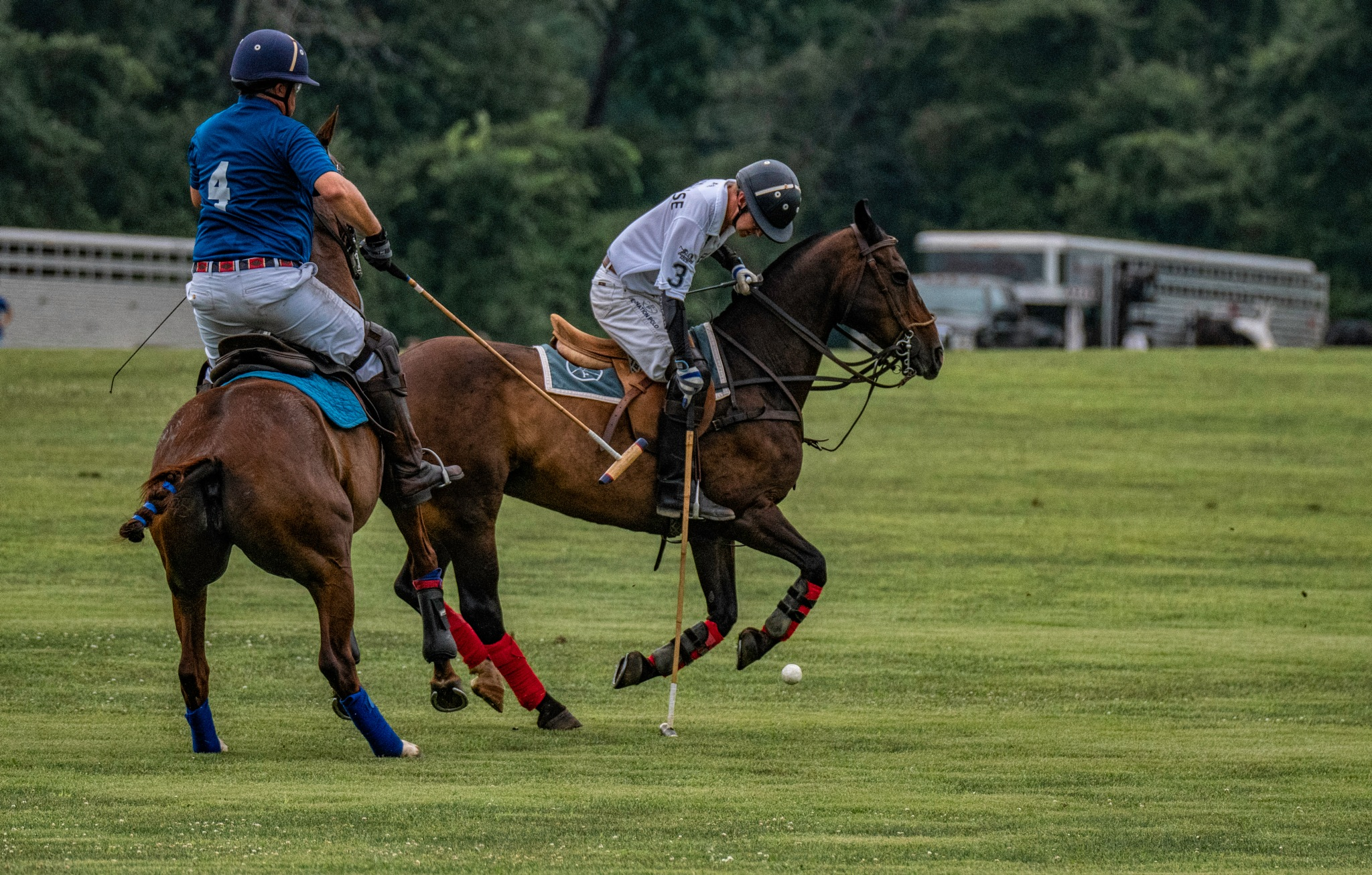 Polo 21 by JohnEllingson