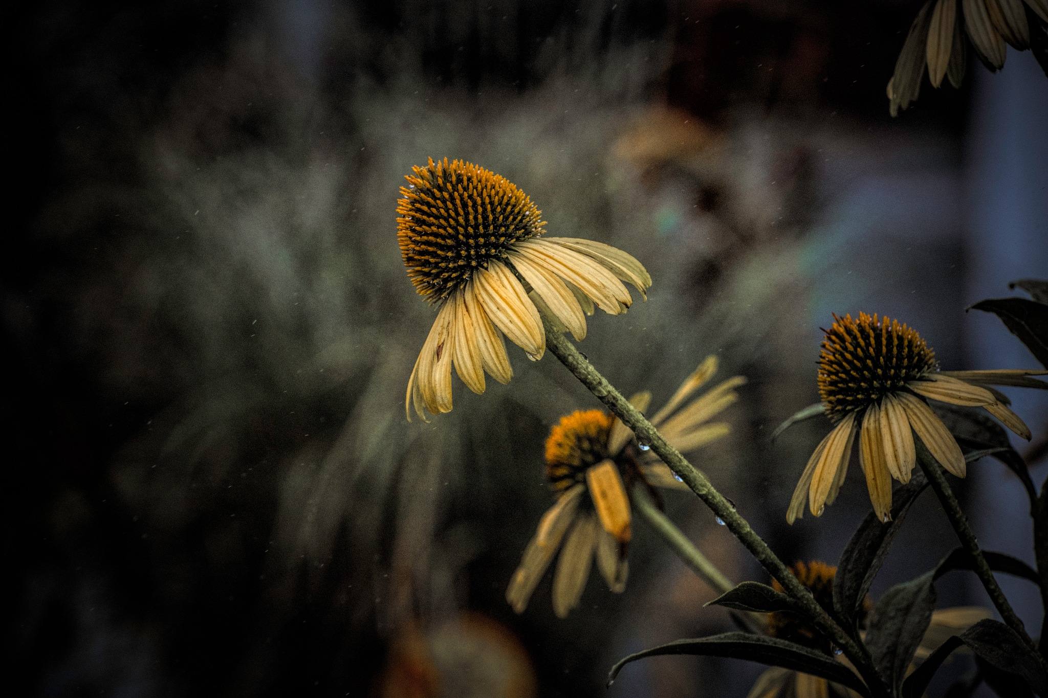 Flower 9-2-18 by JohnEllingson
