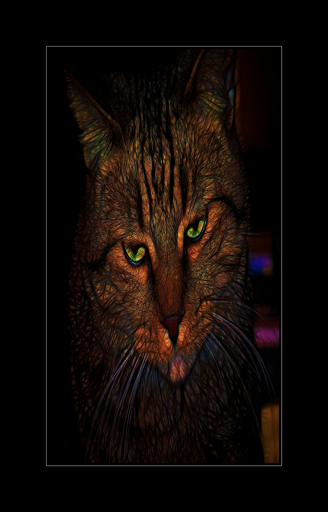 Catface 1 by JohnEllingson