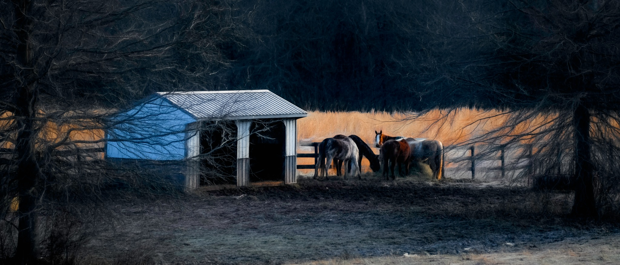 Virginia Horses by JohnEllingson