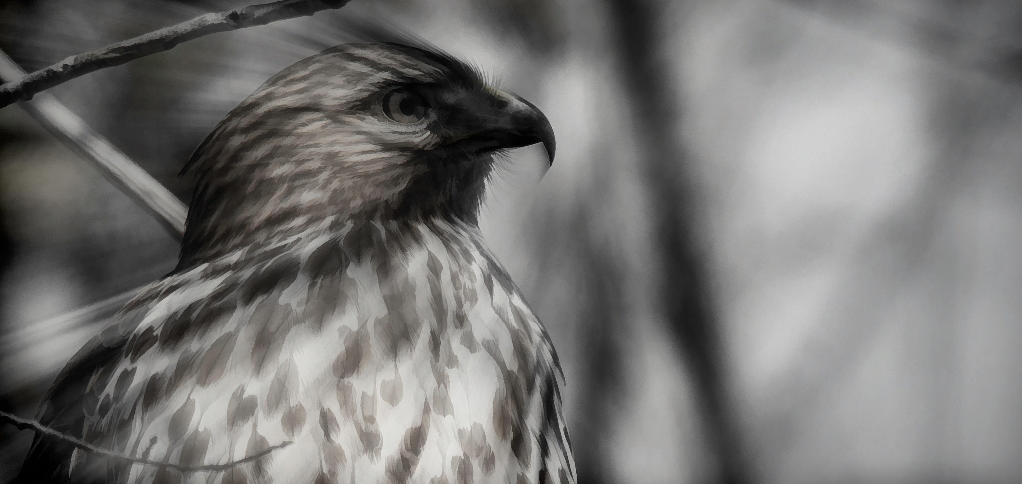 500 Hawk 7 by JohnEllingson