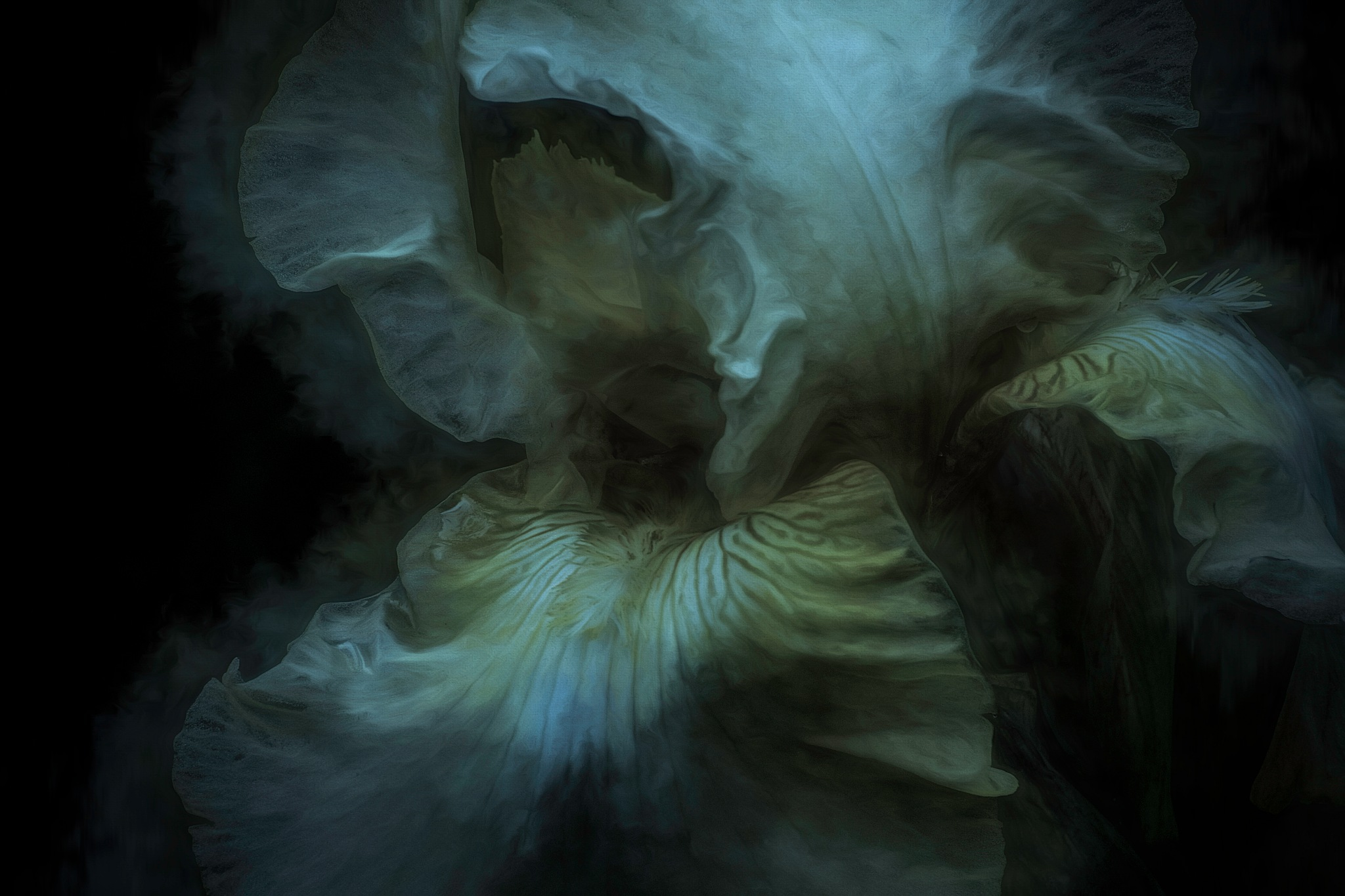 Late Iris 12 by JohnEllingson