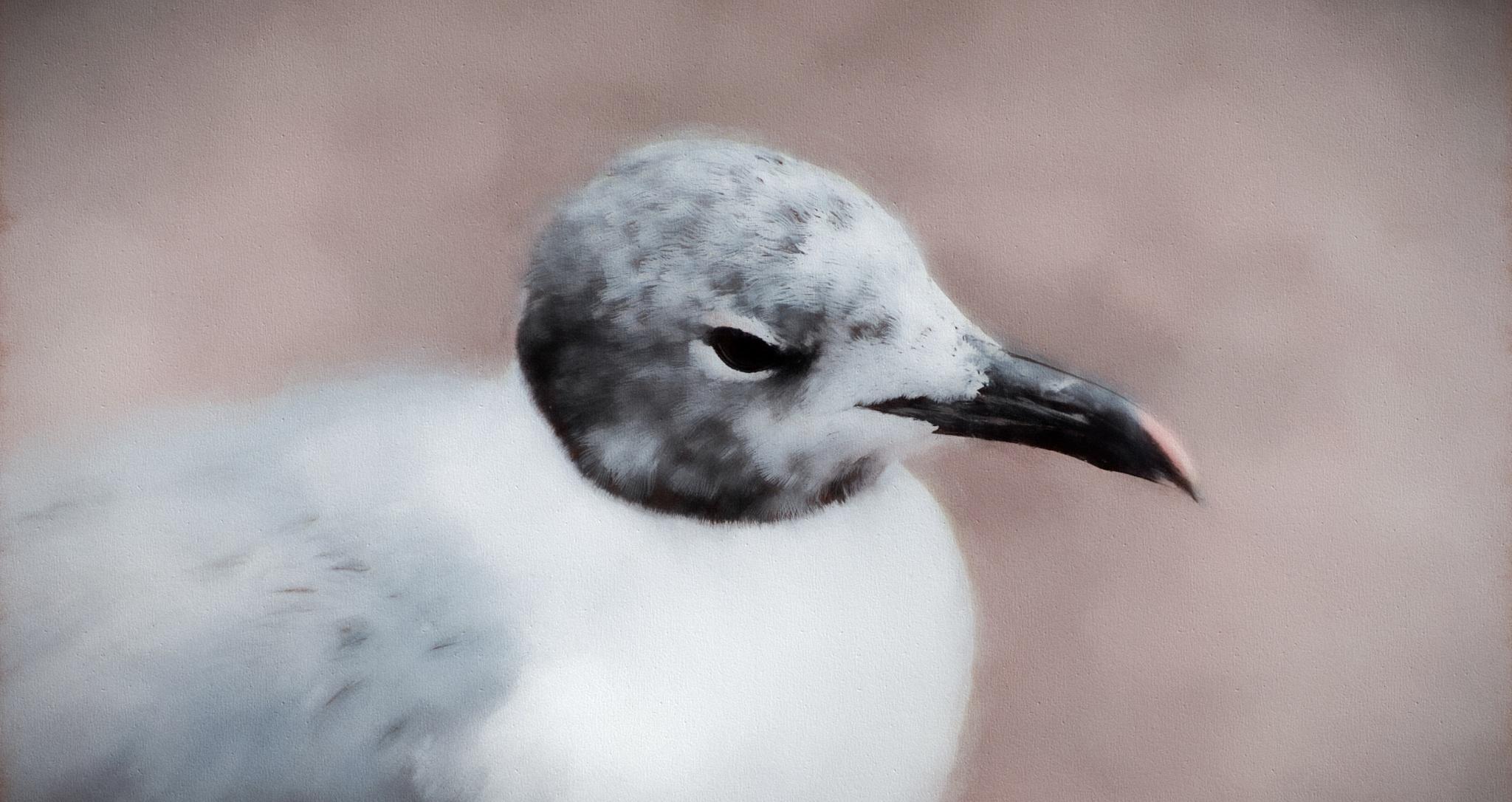 Gull Friend by JohnEllingson