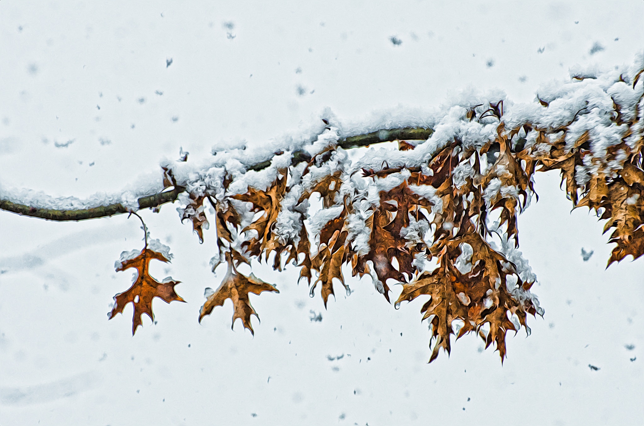 Snow on Oak 3 by JohnEllingson