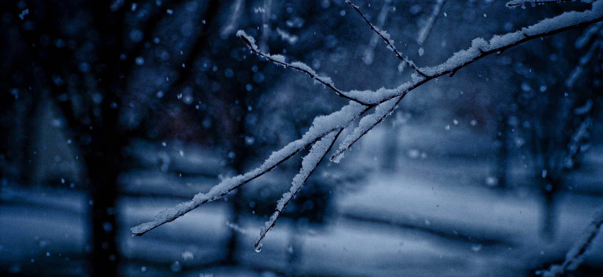 Snow on Birch 5 by JohnEllingson