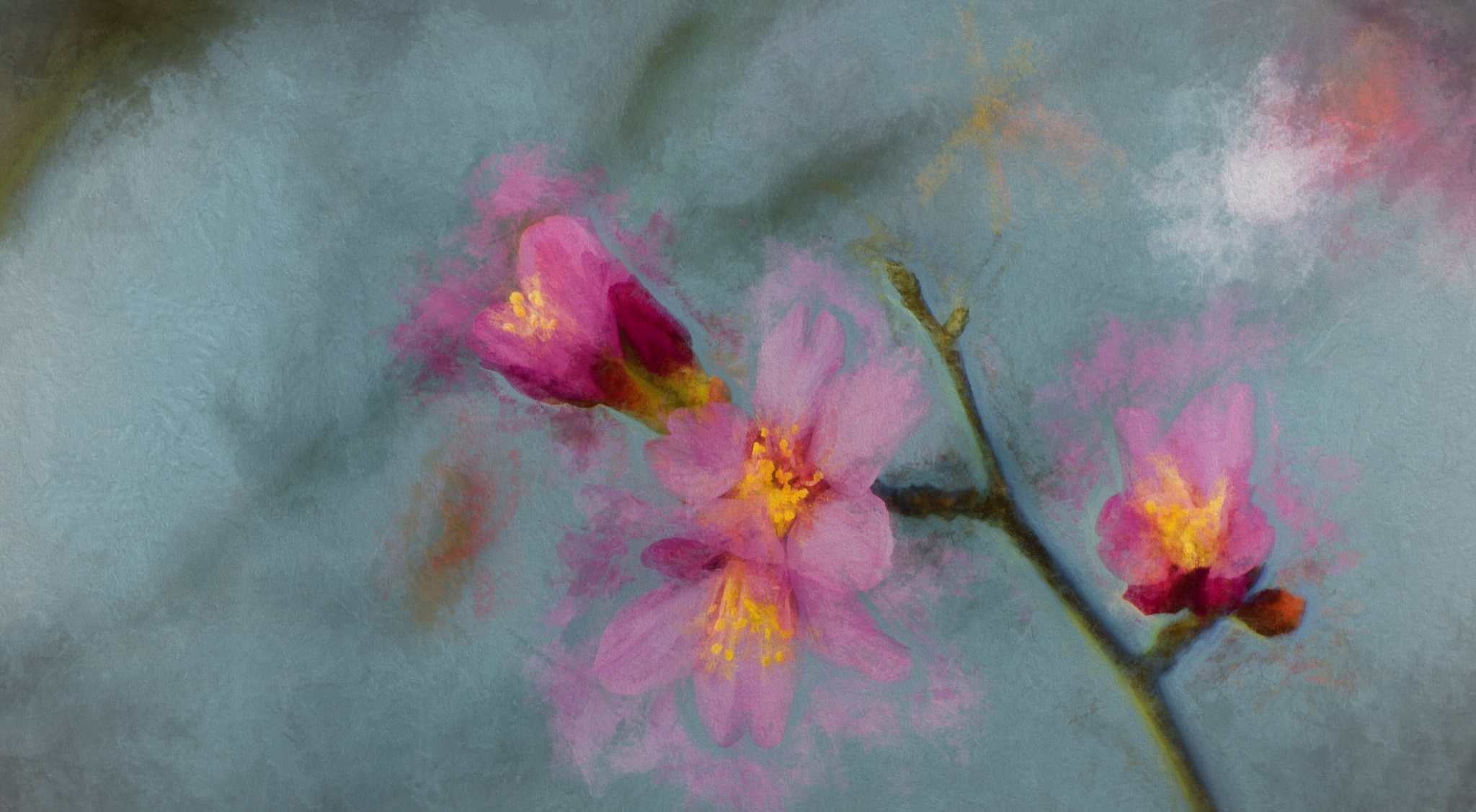 Cherry Blossom 6 by JohnEllingson